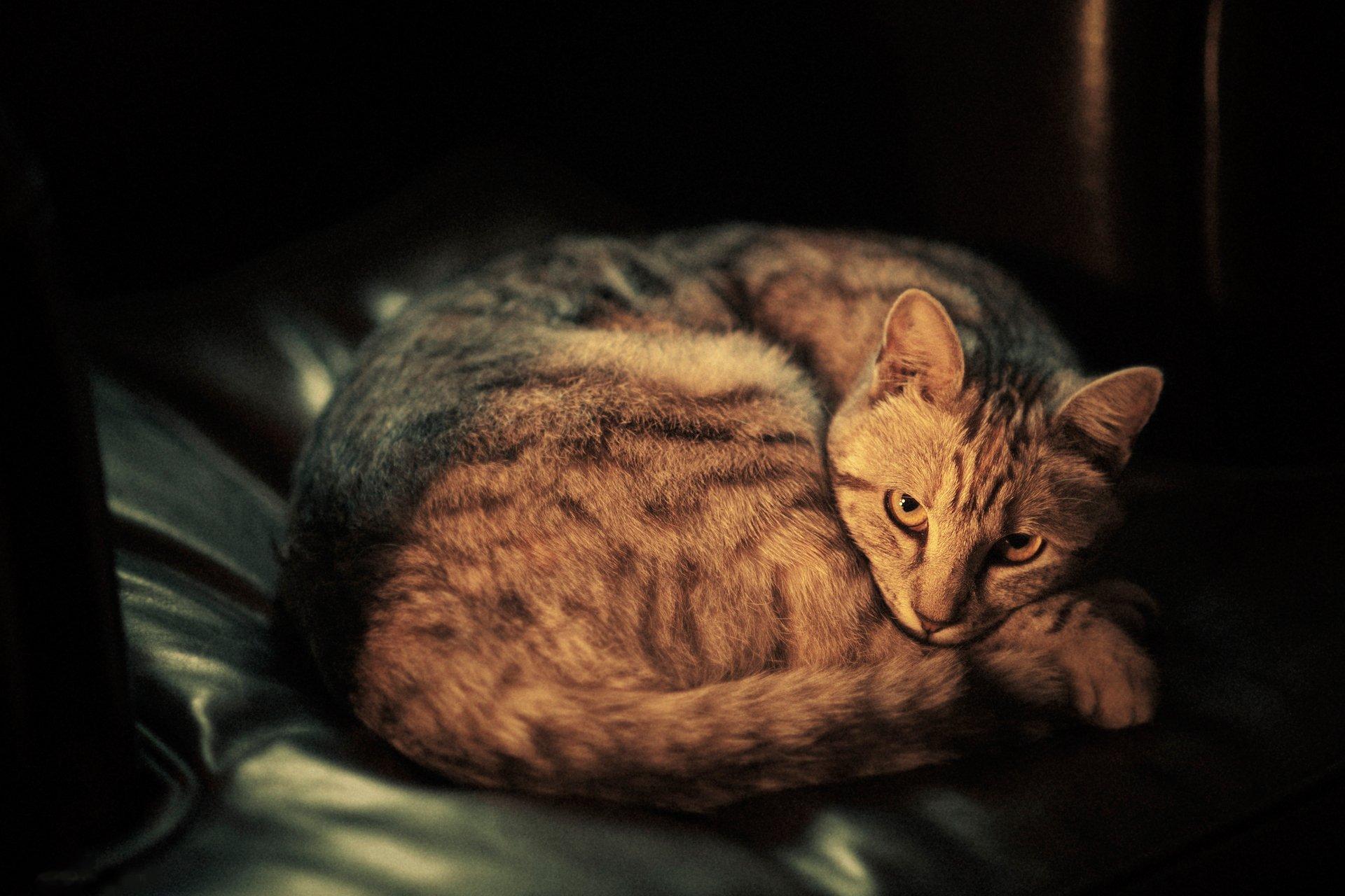 Маленький котенок одинок картинка белокожей