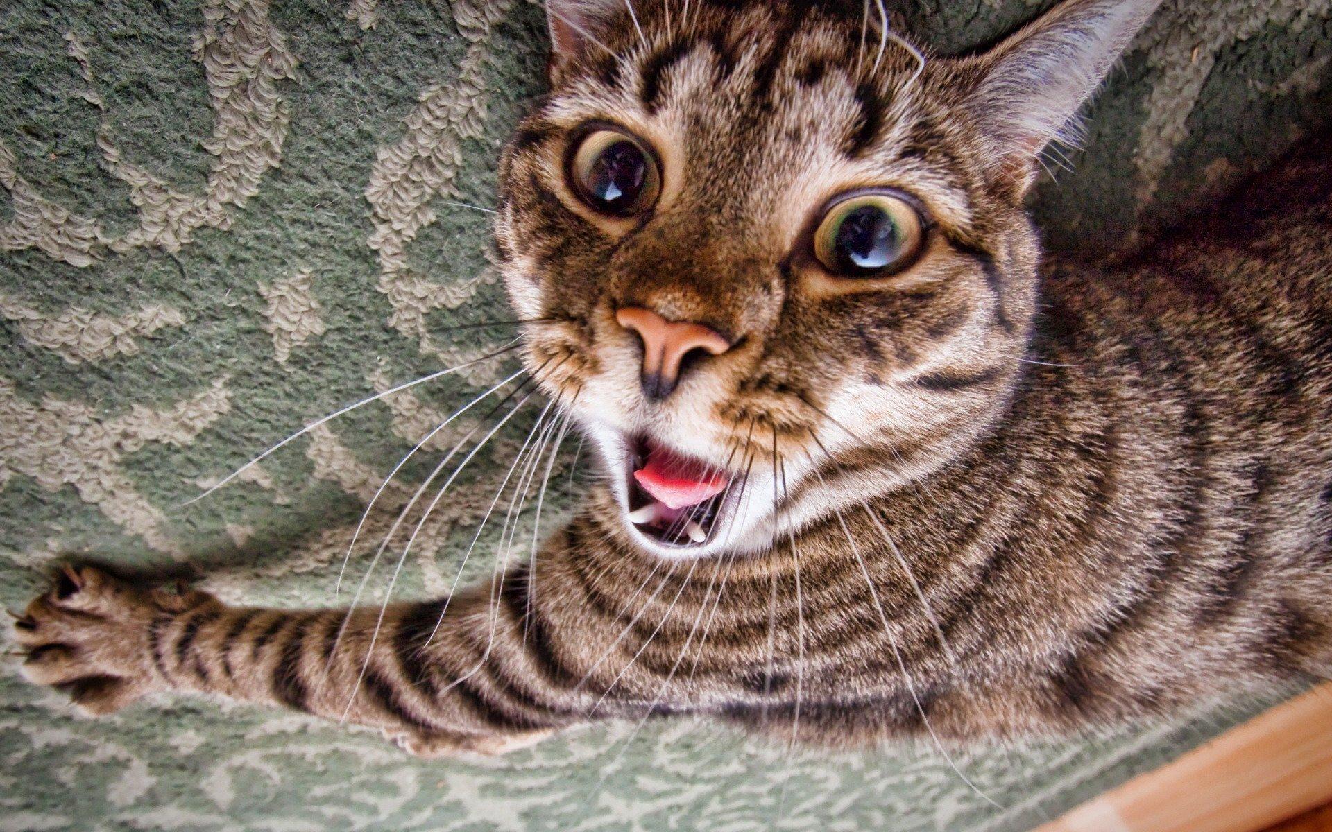 Смешной кот обои на телефон, картинки компьютере