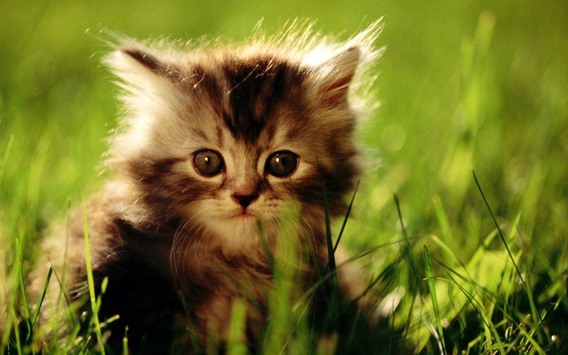 Котенок на траве  № 2959623 загрузить