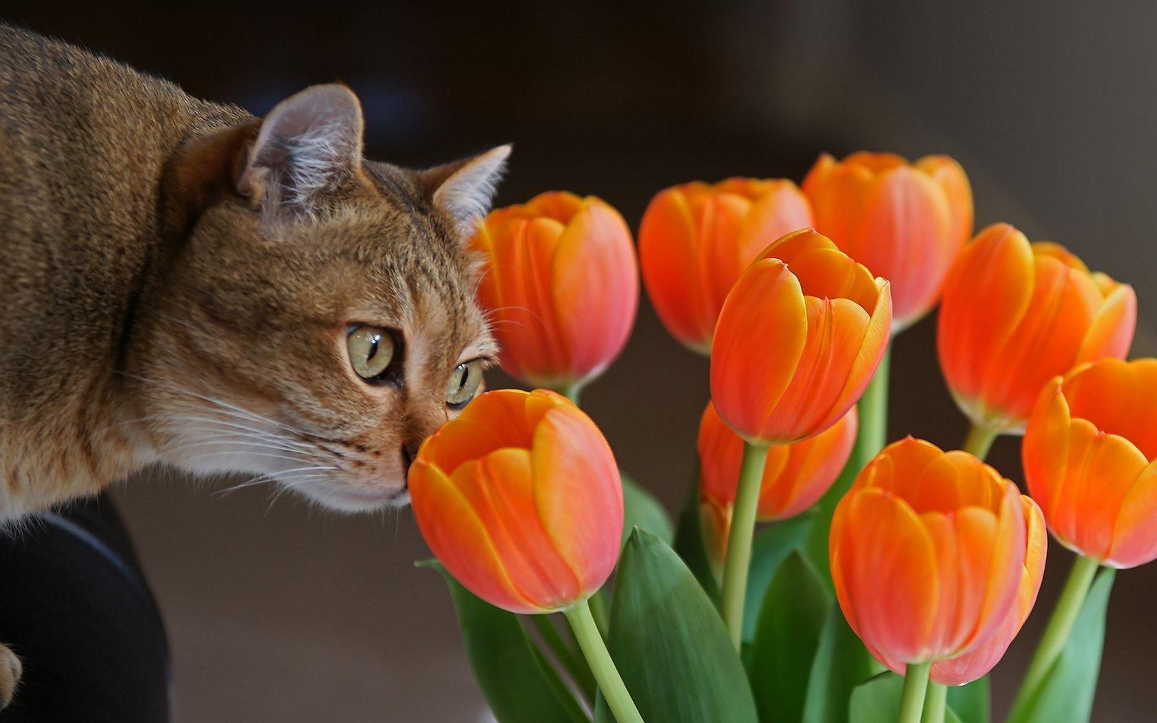 Обои для рабочего стола весна кошка