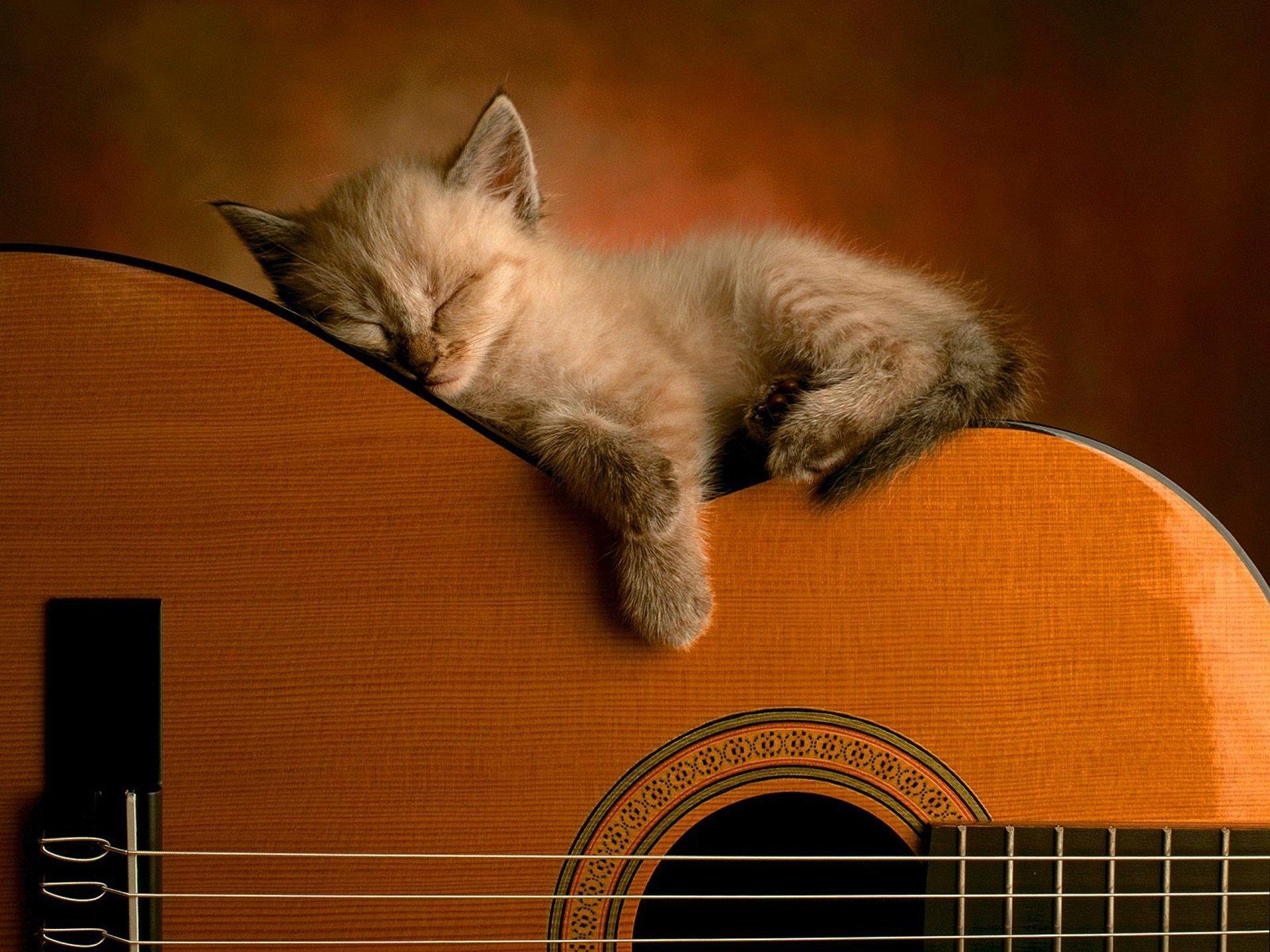Прикольная, кот спит открытка