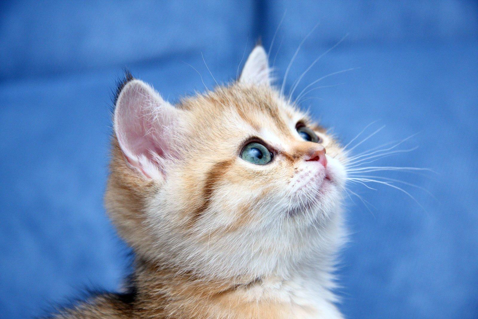 Фото котят на аву в контакте