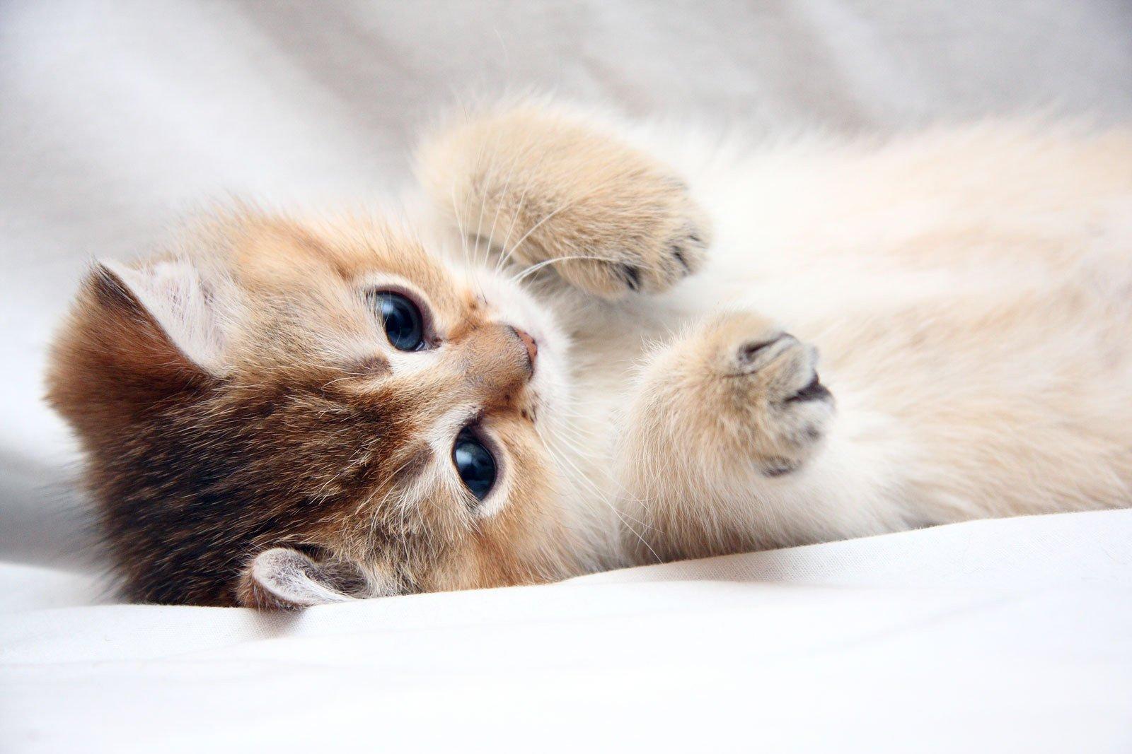 Картинки милые кошки животные