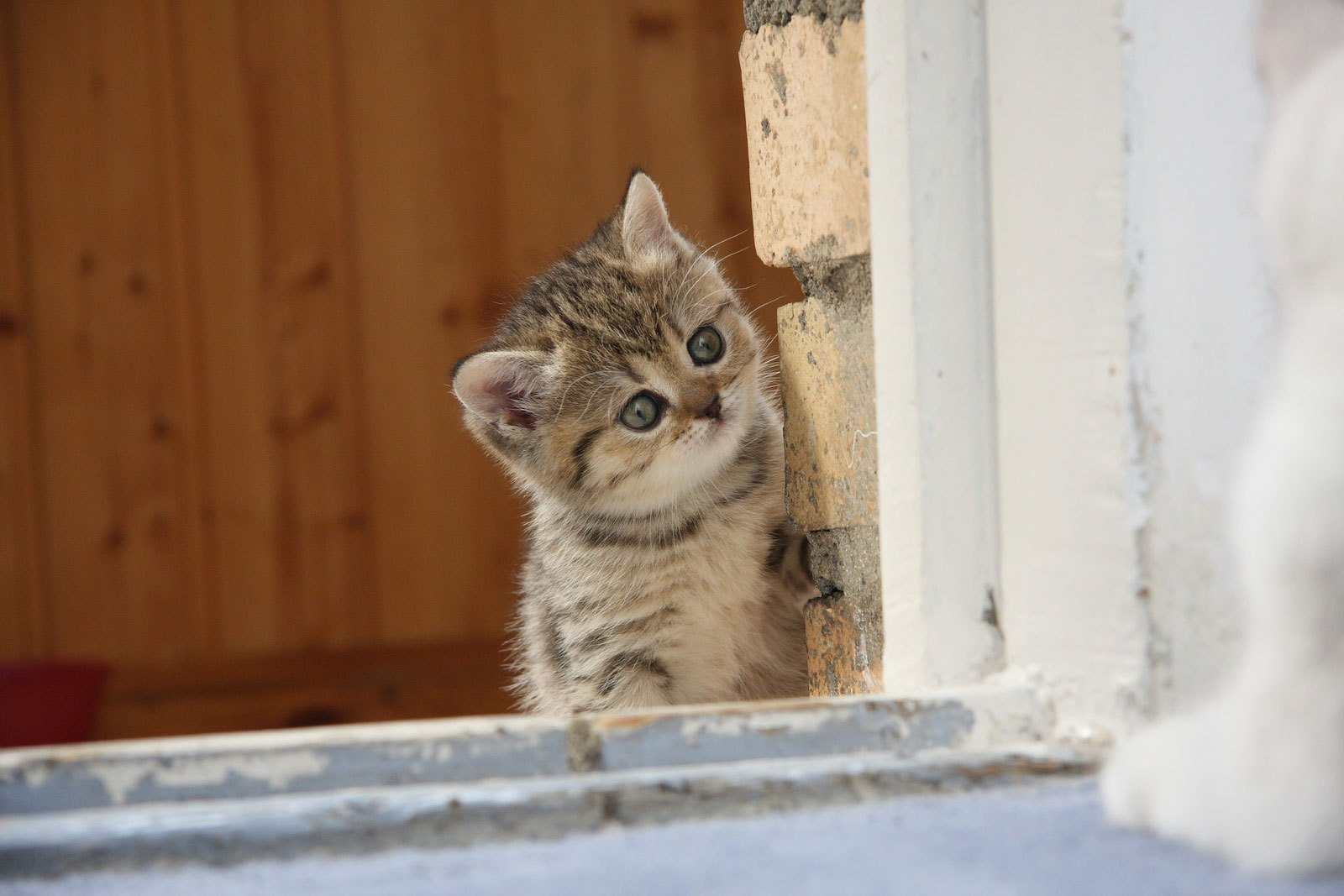 котята на окне kittens on the window  № 3063306 загрузить