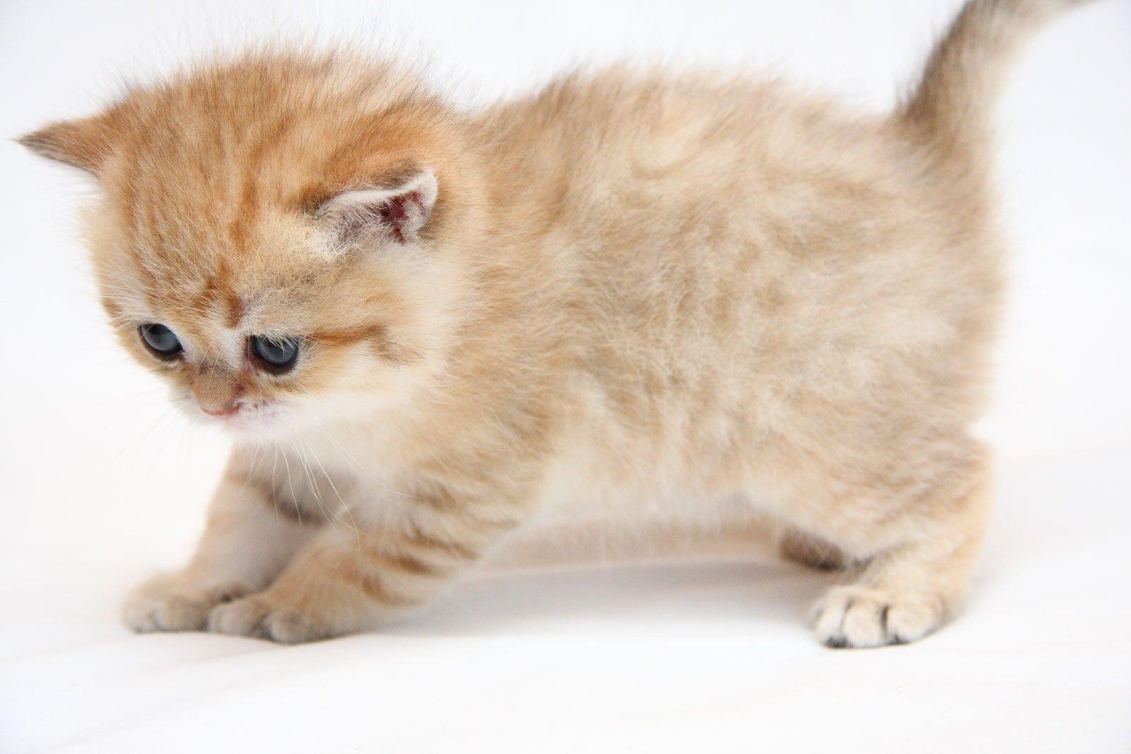 подготовиться фотосессии картинки котята или коты пришло