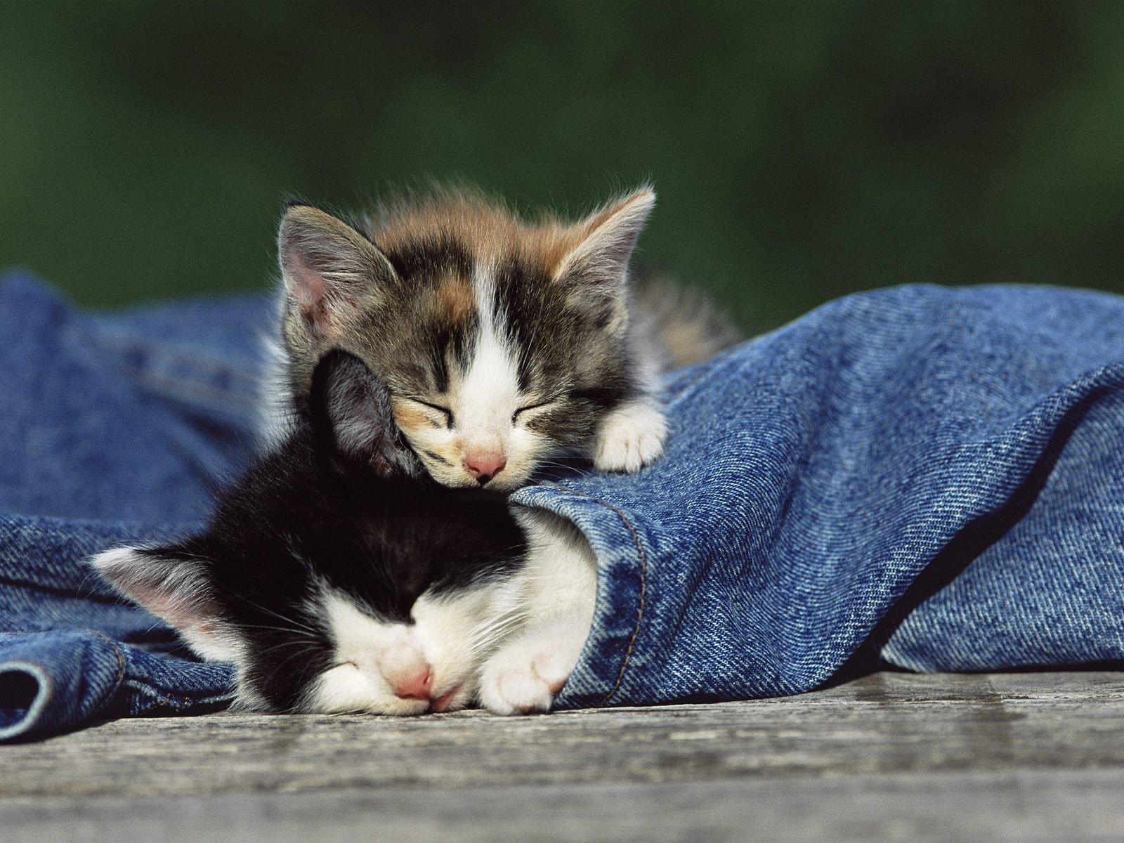 фото спящие котята представлена матовым коричневым