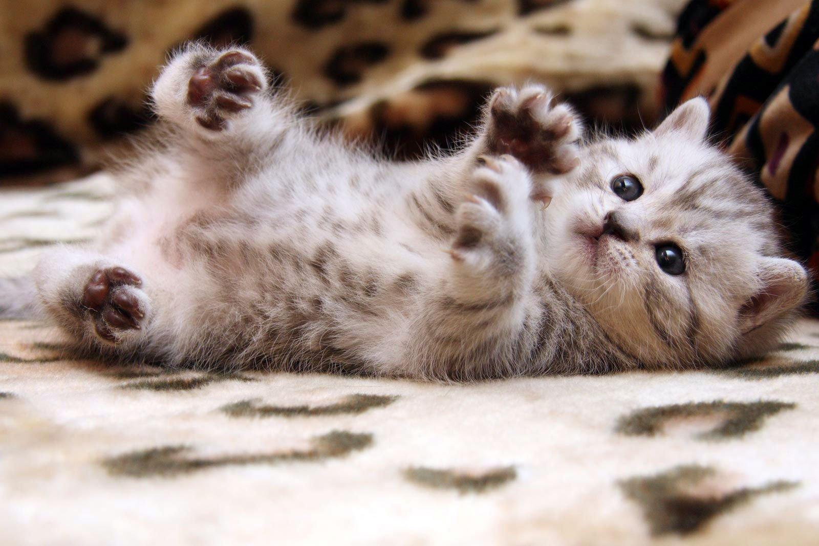 кирпичная стена картинки хорошенькие котята болезни