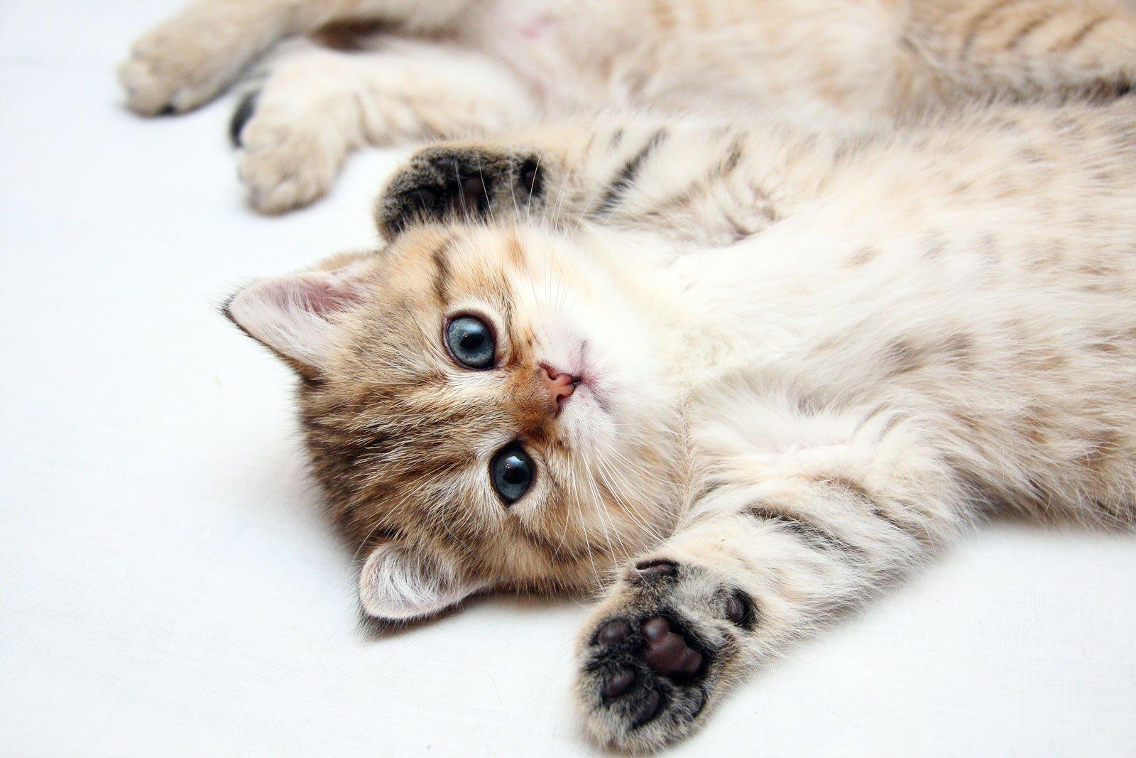 Картинки прикольных котят на рабочий стол