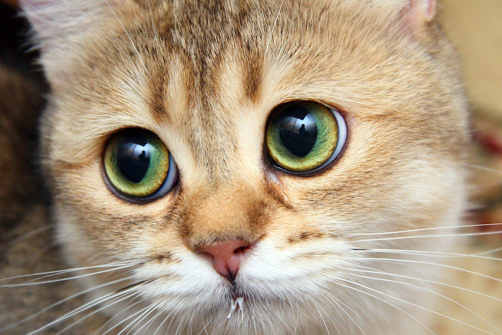 кошка зеленые глаза постель  № 3655557 бесплатно