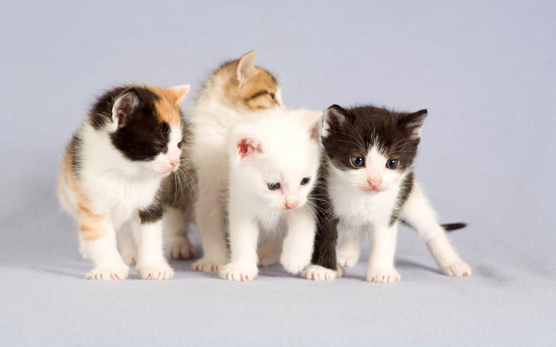 картинки с четырьмя котятами эритема