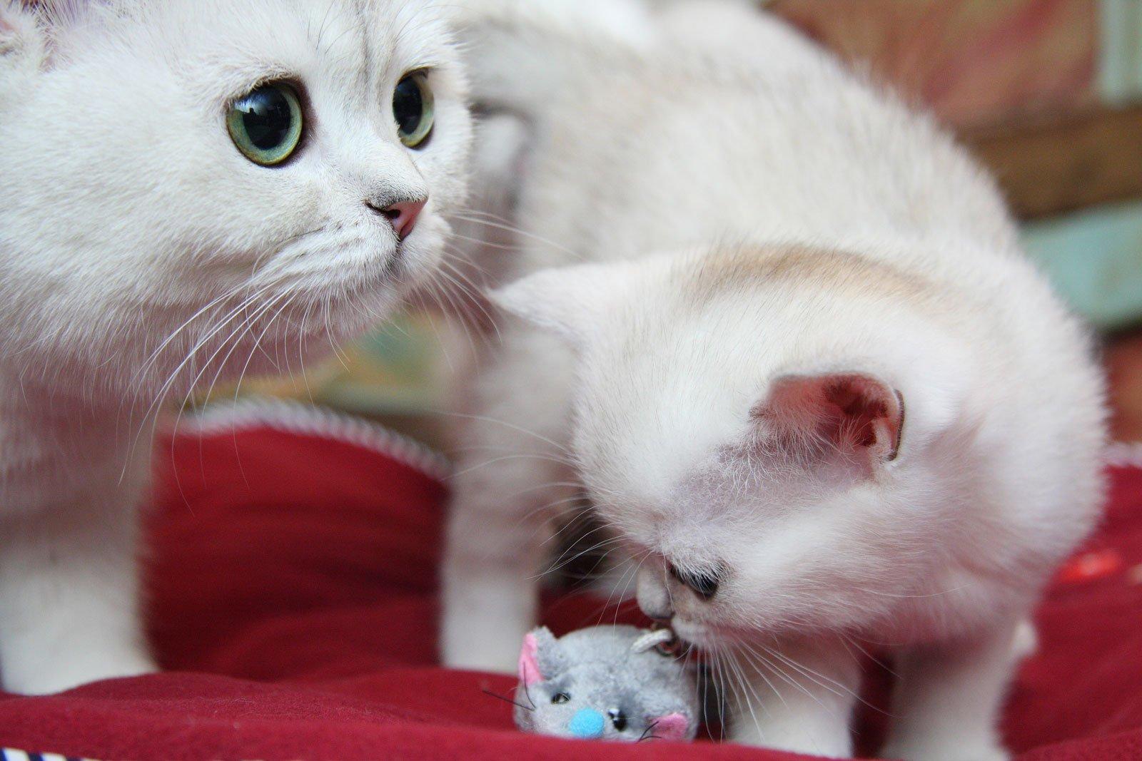 Открыток, картинки кошки и котята и коты