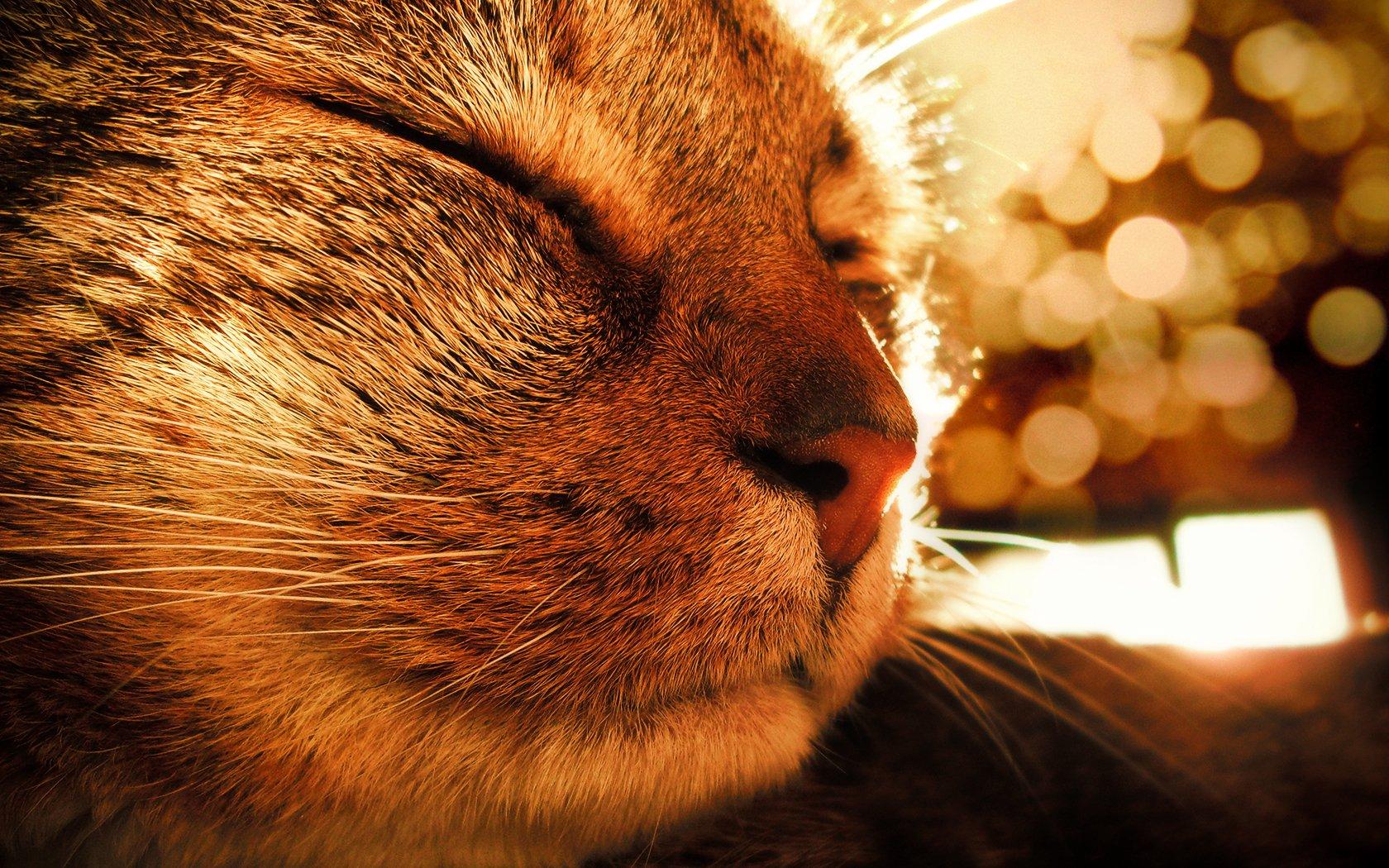 Котики и солнышко картинки