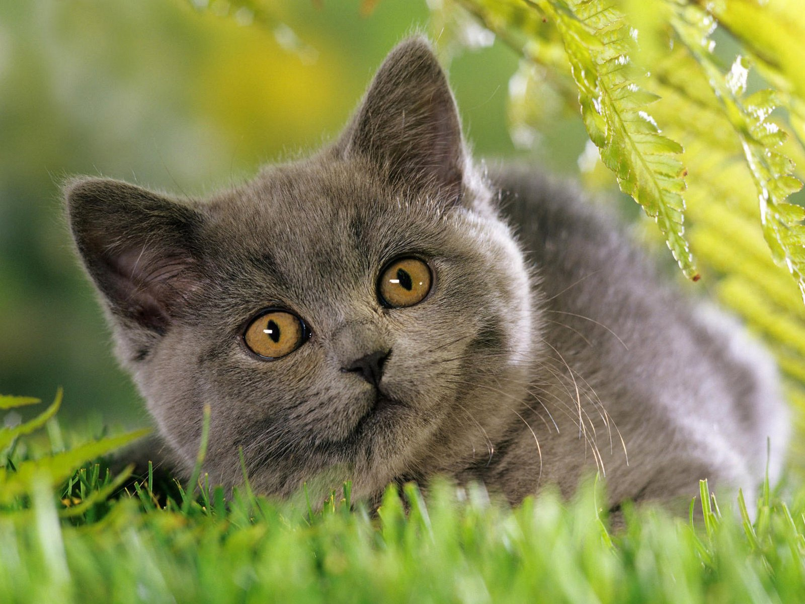природа животные кот котенок серый журавлики nature animals cat kitten grey cranes  № 654668  скачать