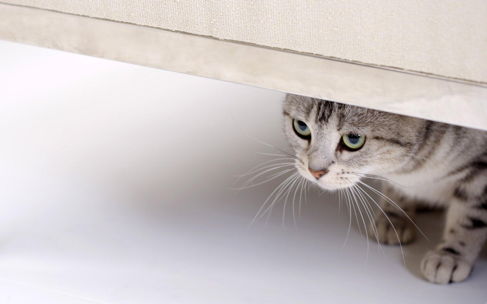 живые обои на рабочий стол кошка ходит по монитору № 177753  скачать