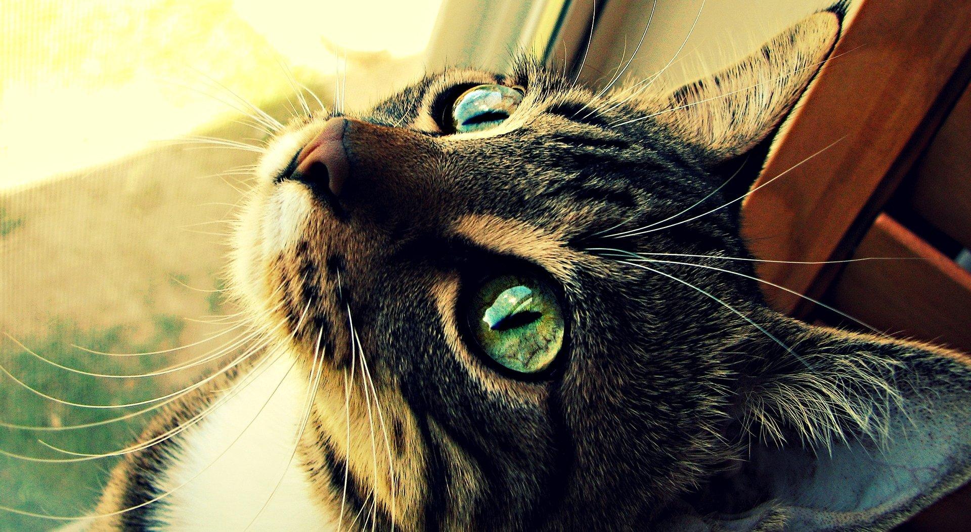 Байрам, коты картинки на аву