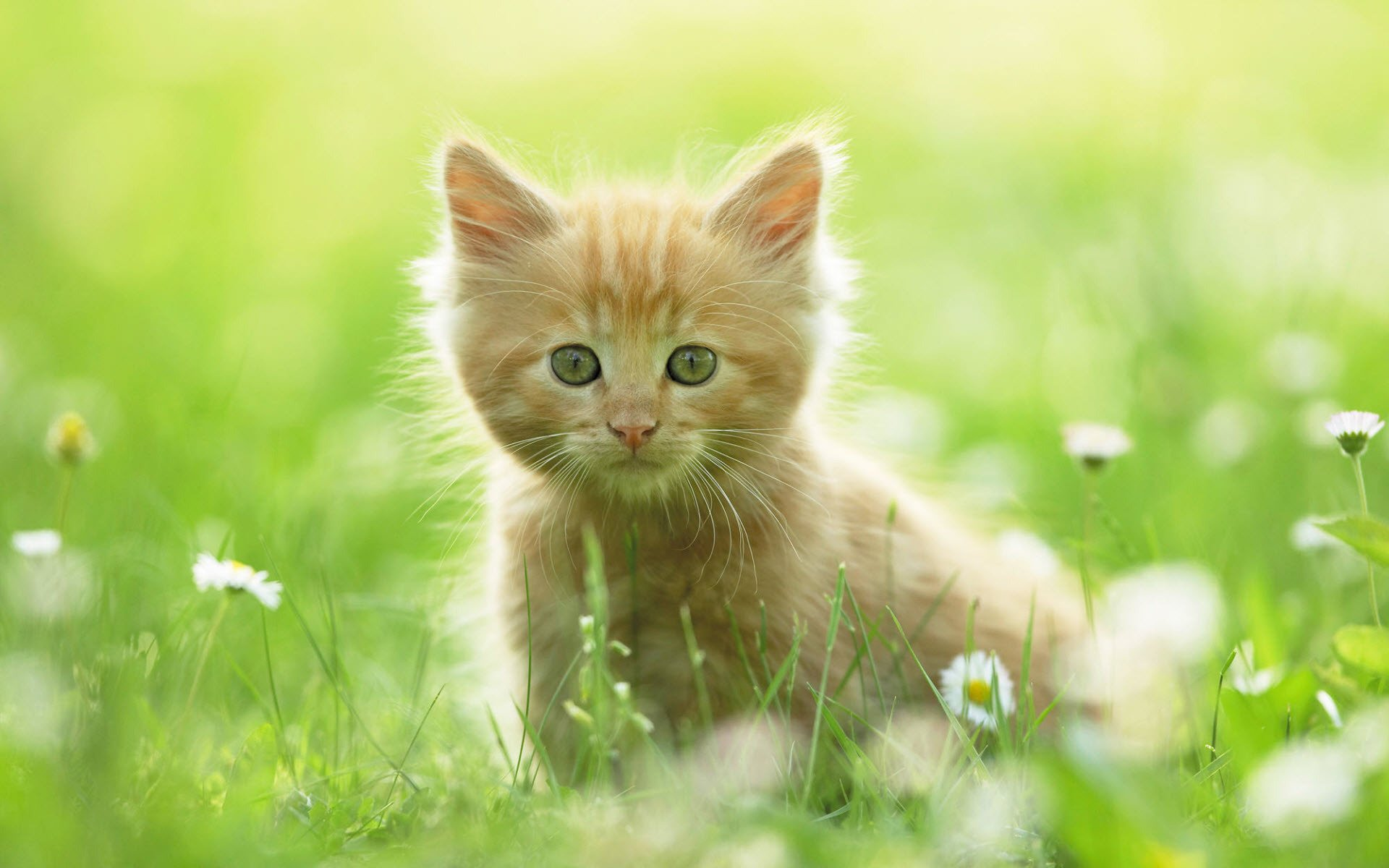 how to remove cat urine smell from microfiber couch