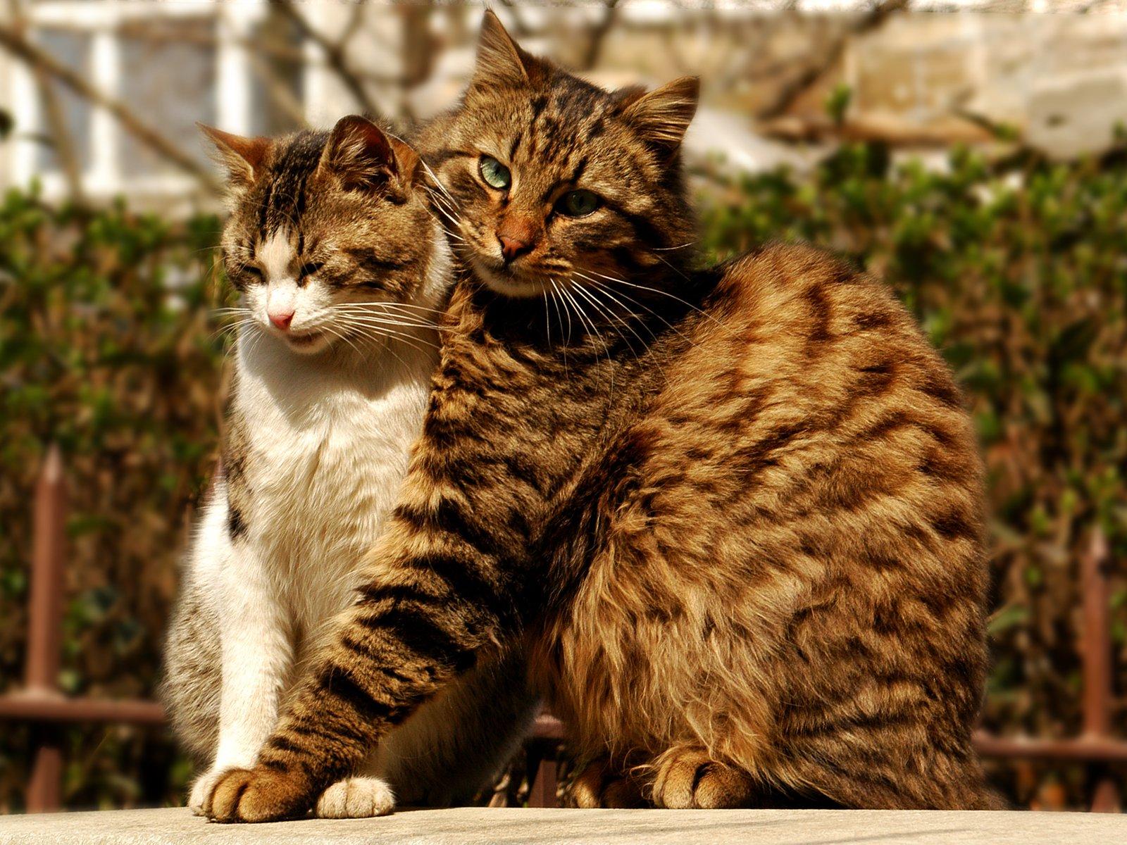 Коты и кошки картинки, пятница открытки прикольные