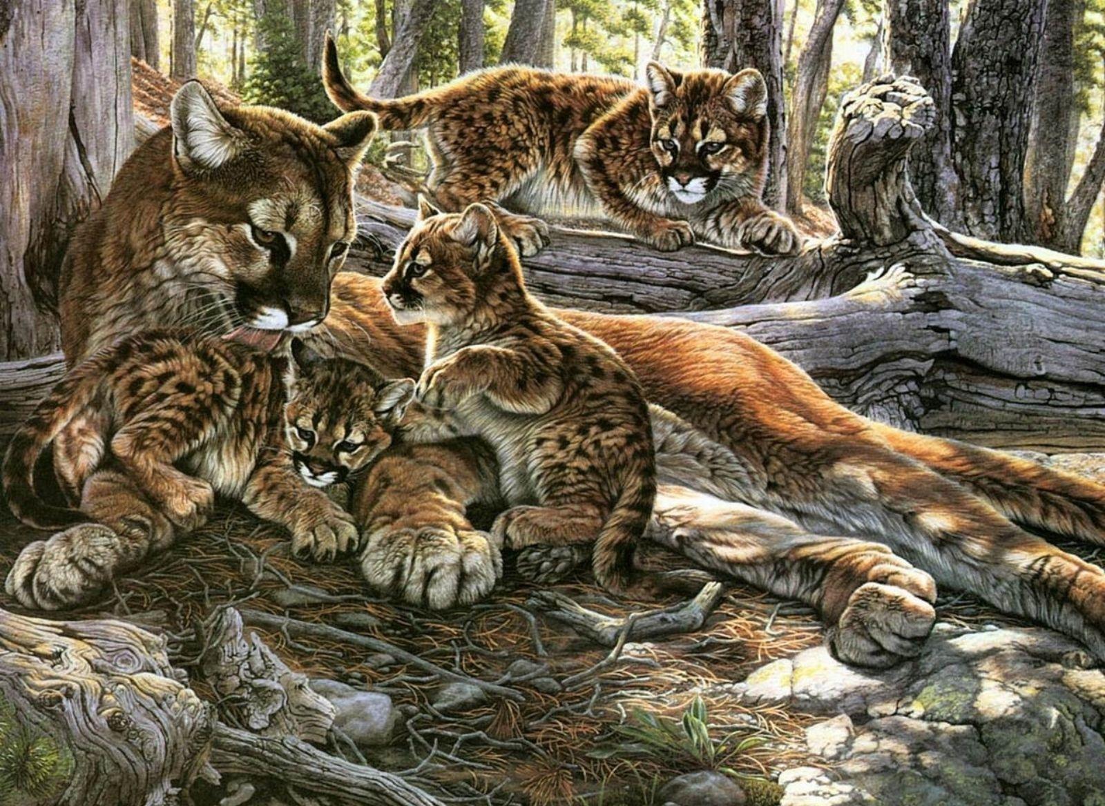 Детские картинки хищников