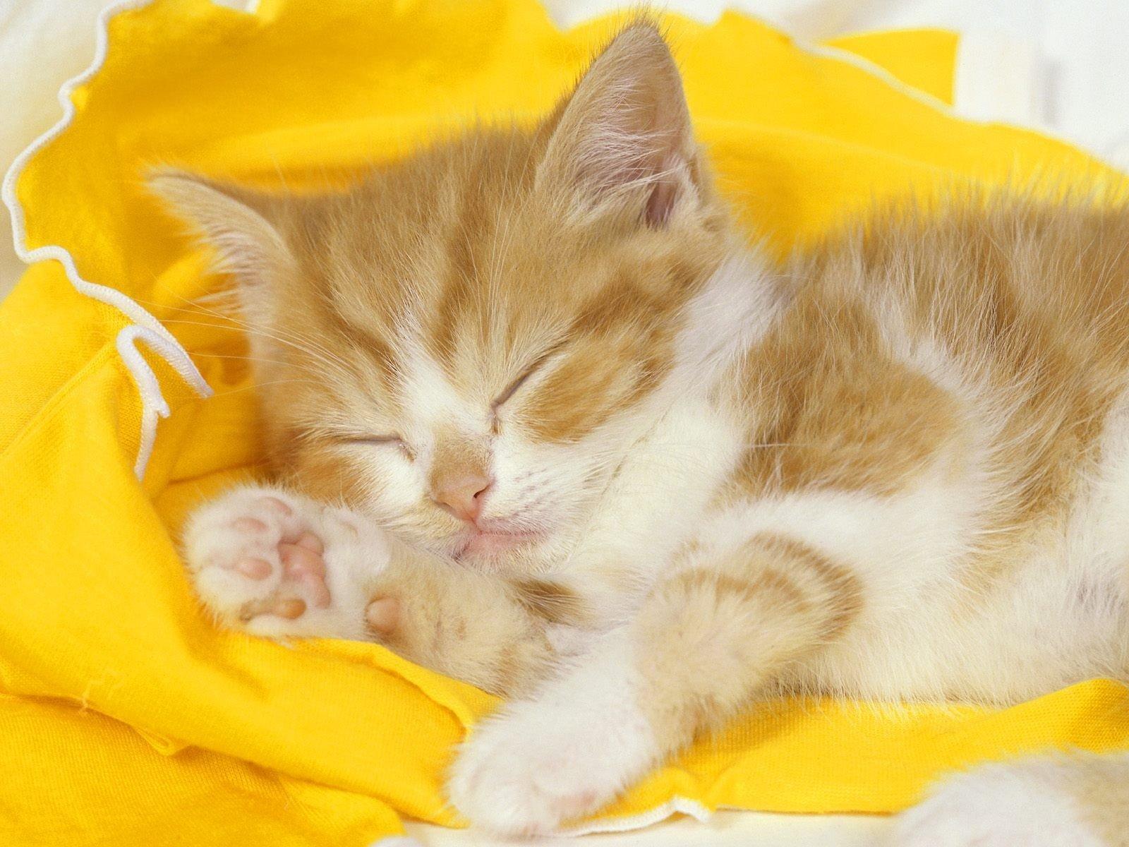 Сладкие котята картинки