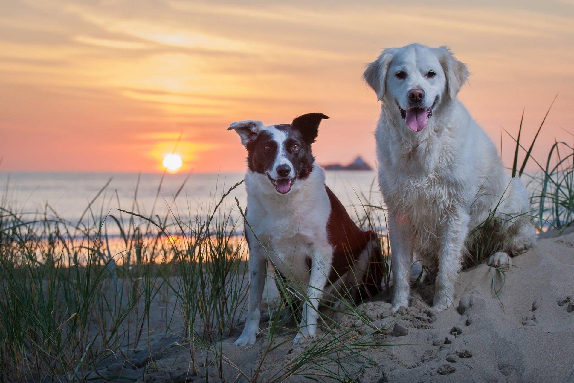 собака песок вода животное природа  № 956893 загрузить