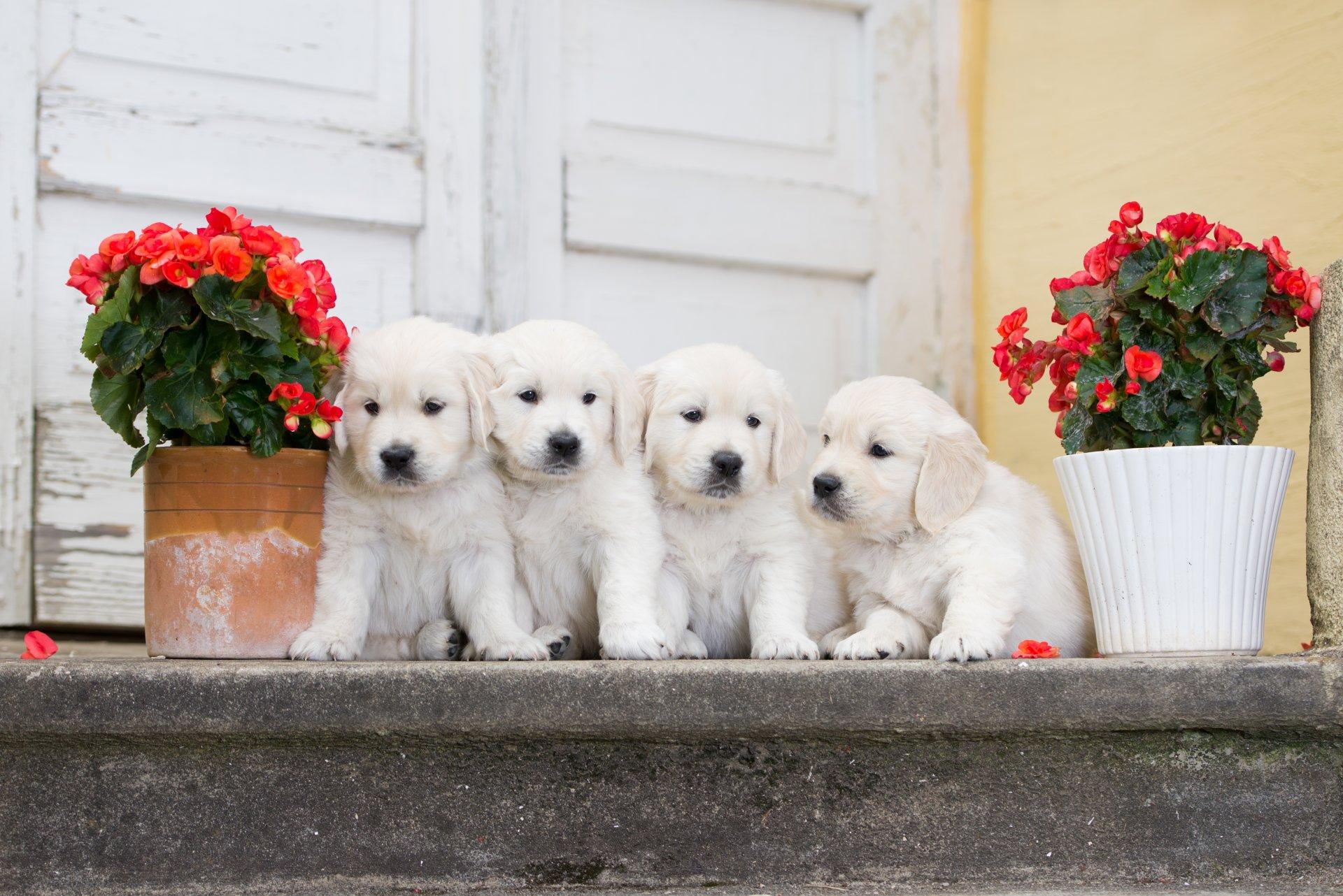 щенок и цветы картинки можете увидеть группу