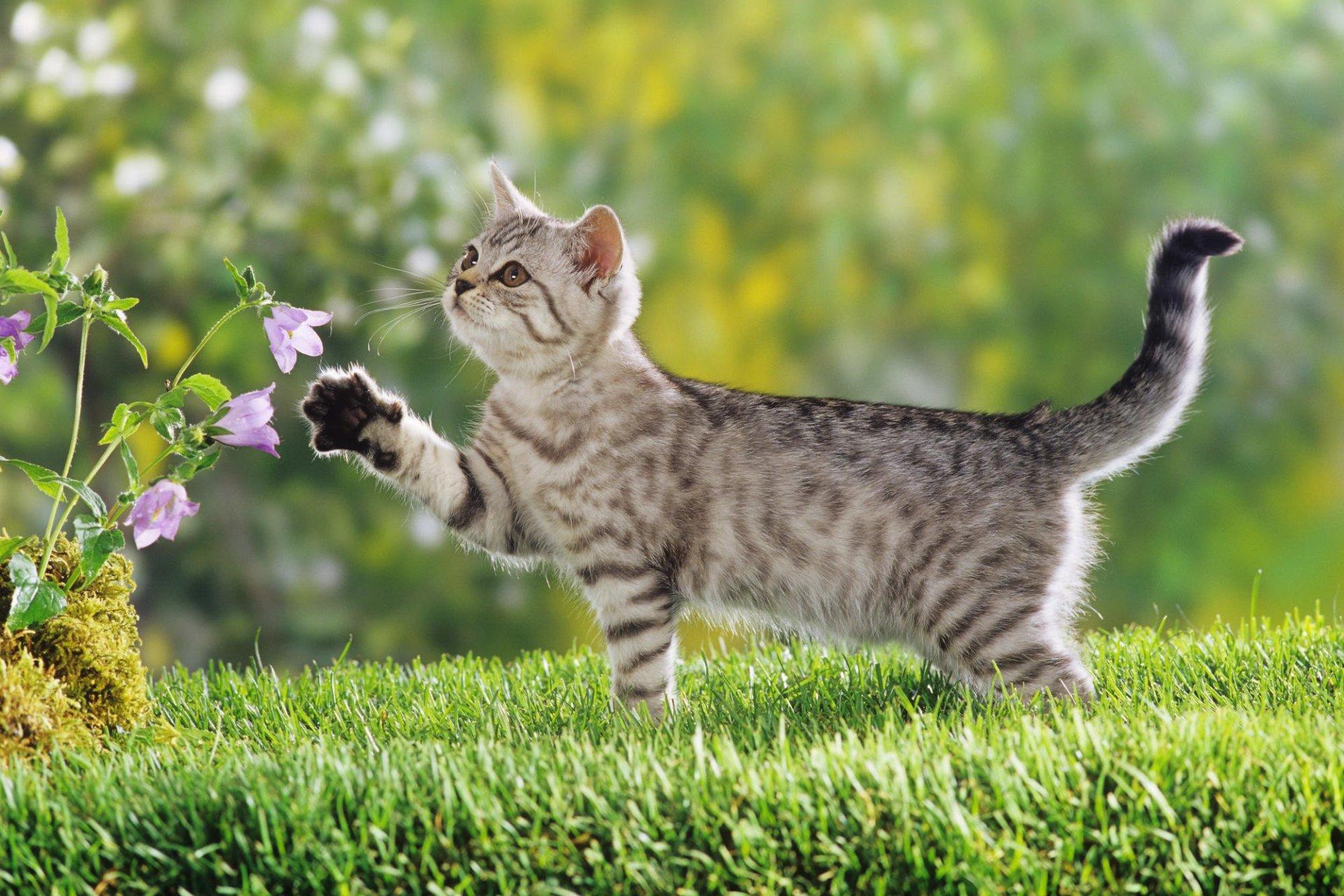 Что думает обо мне кошка, когда я «мяукаю» ей в ответ?