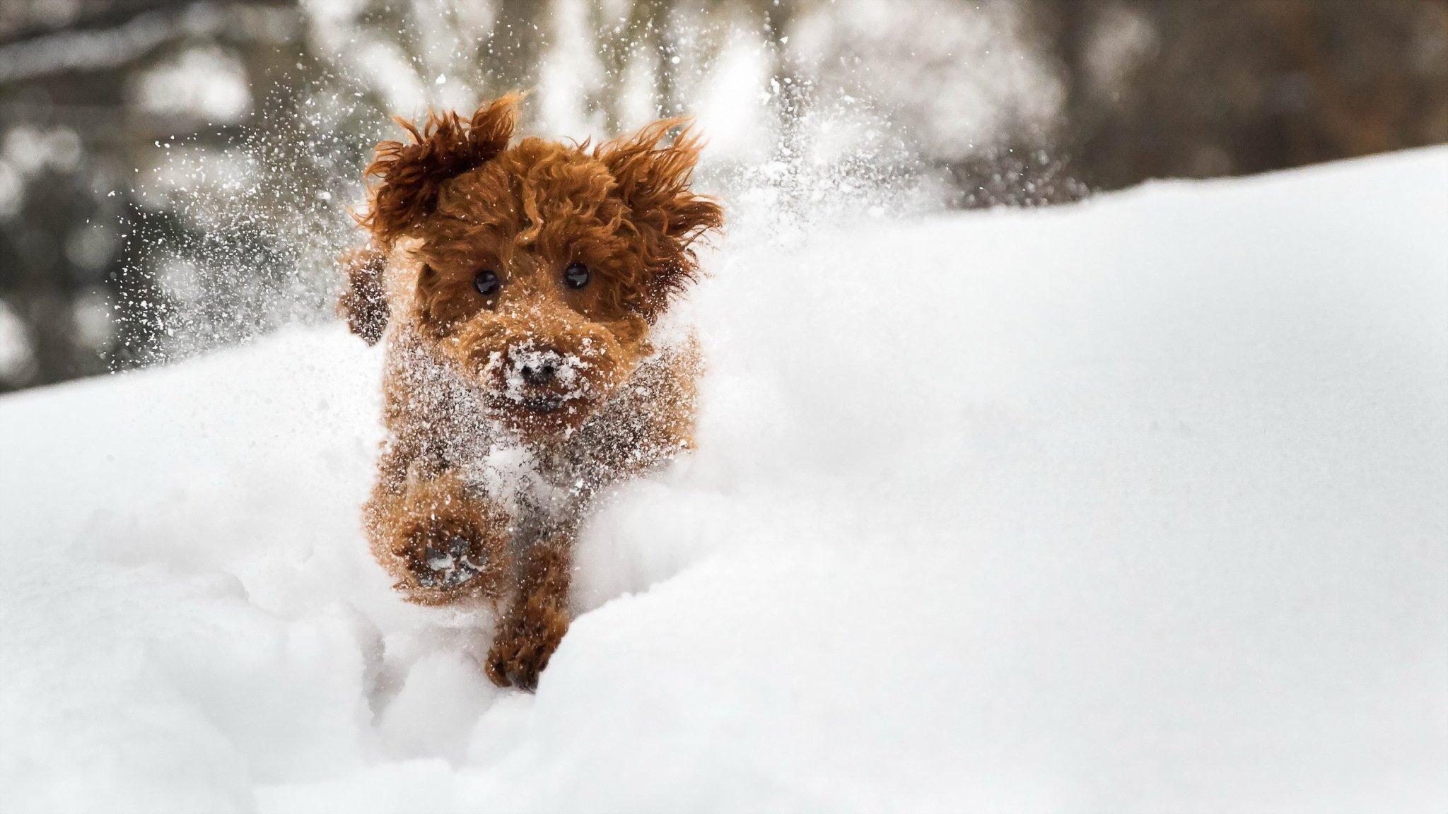 рыжая собака посреди снега в хорошем качестве