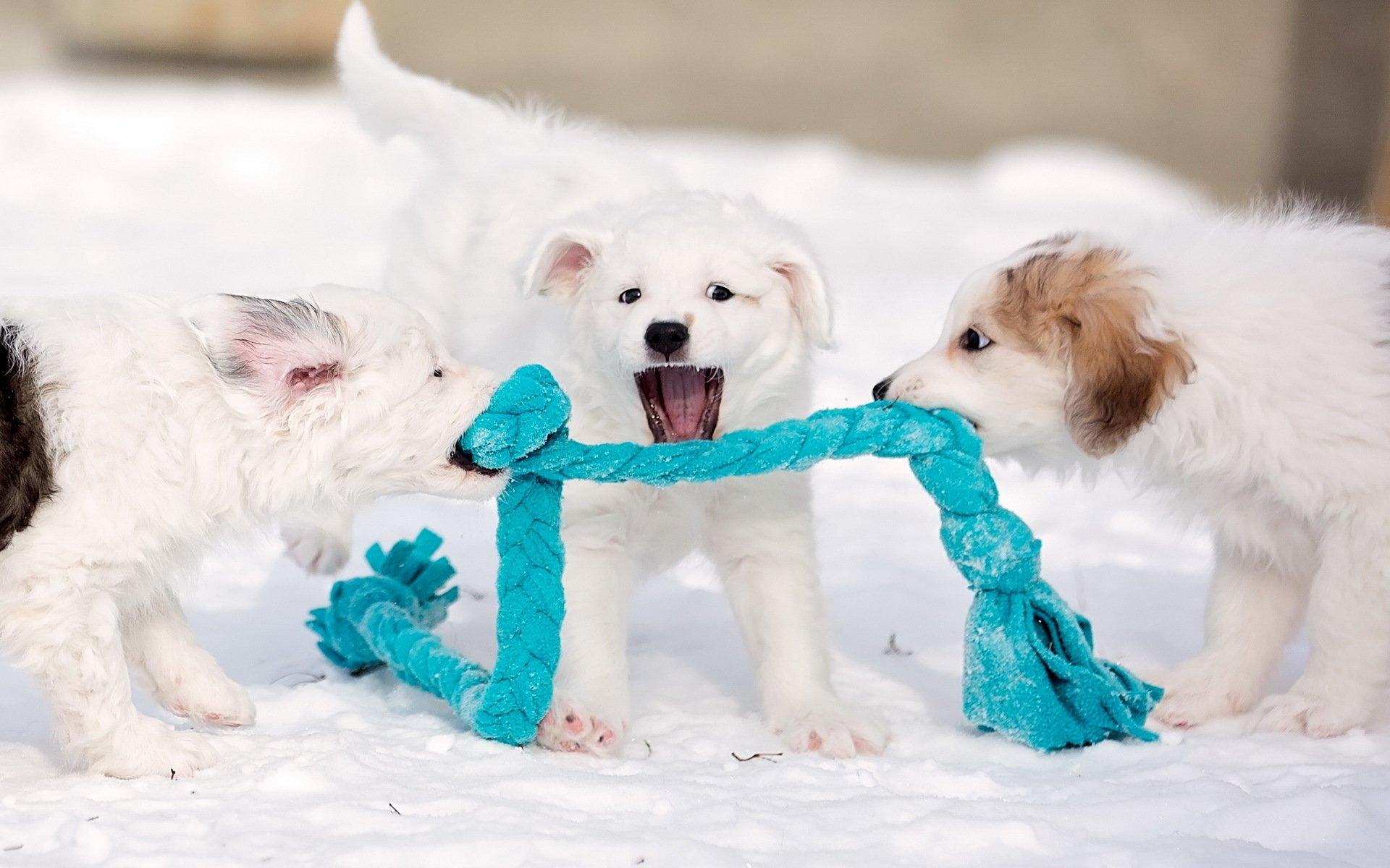 Играющие щенки загрузить