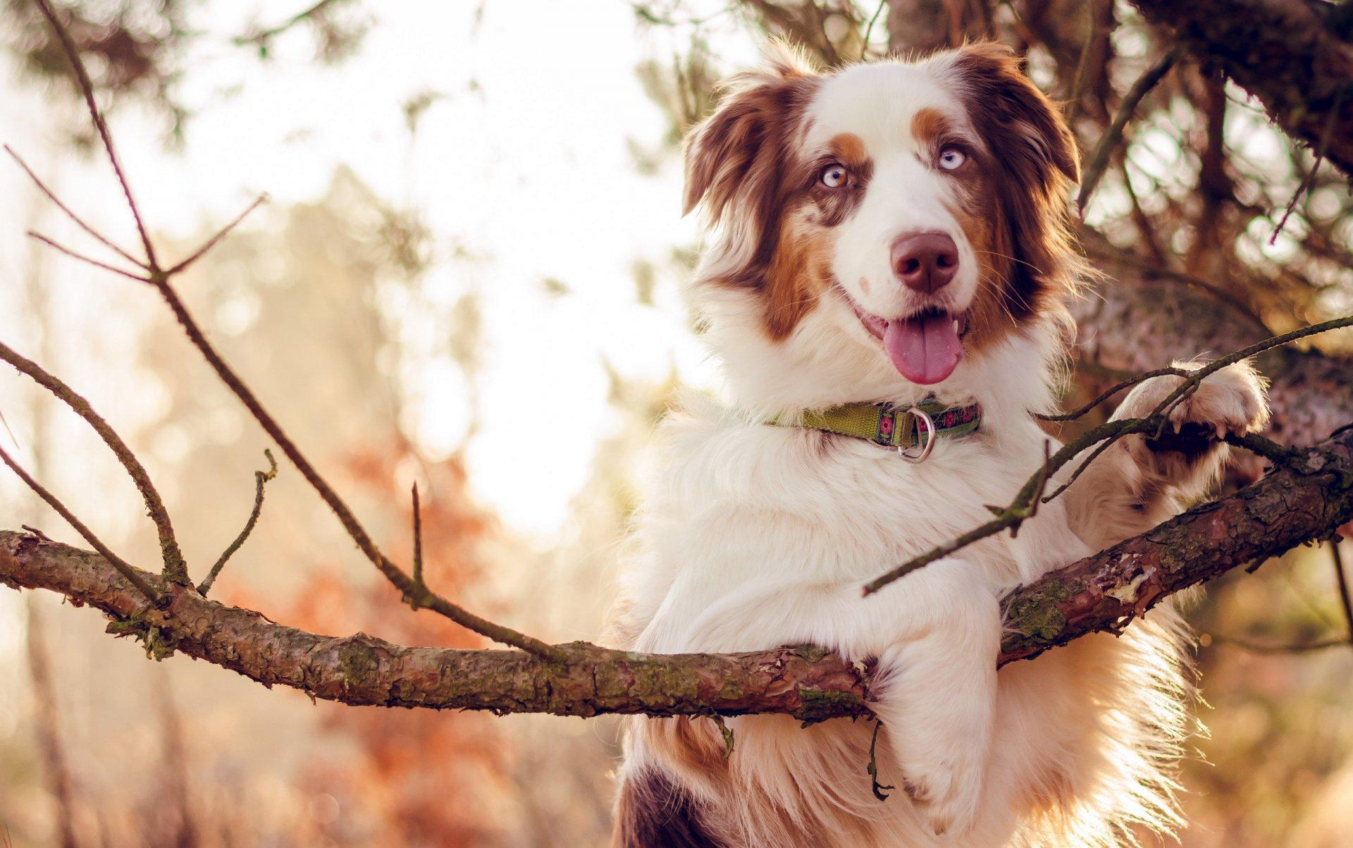 одном весна картинки с собаками хорошую