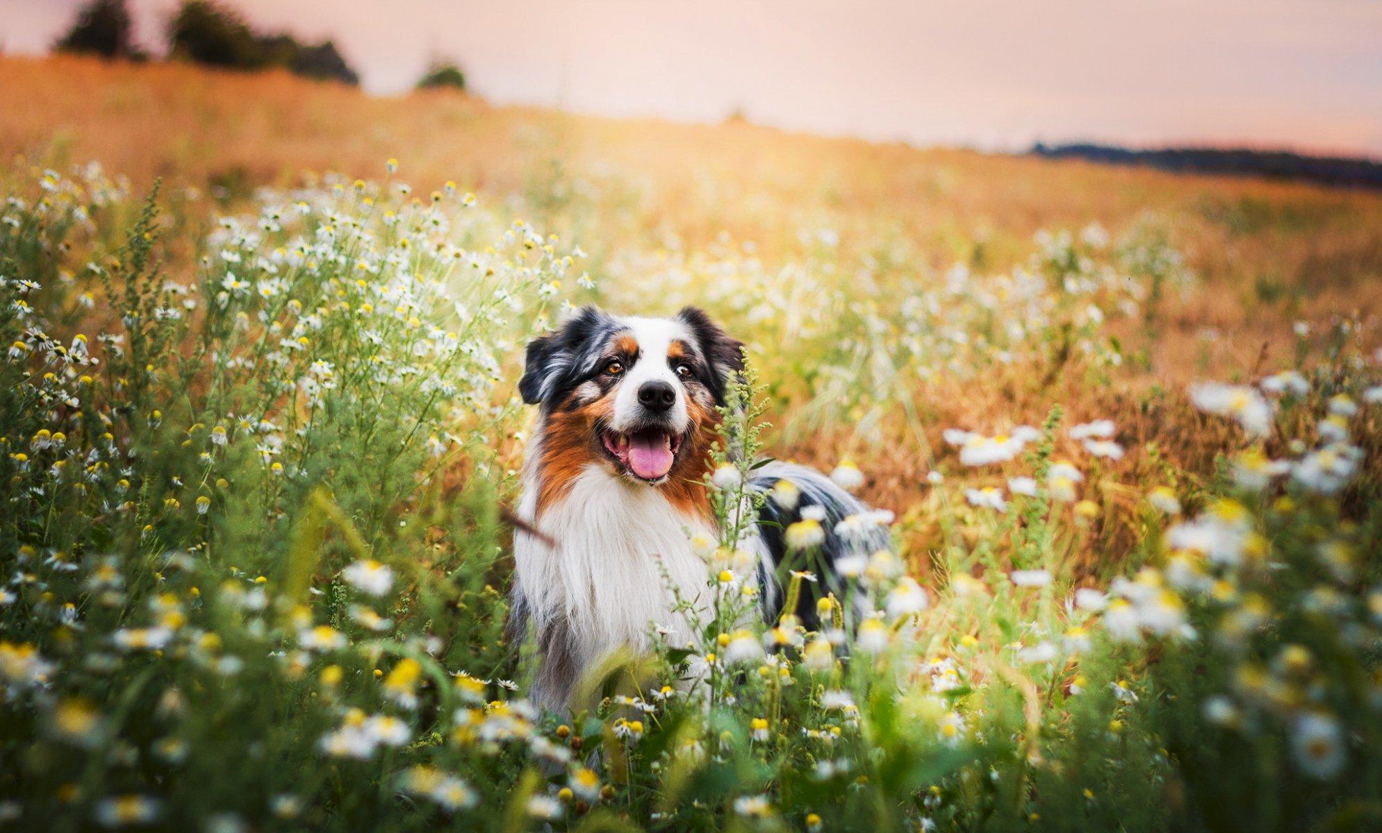 собачка трава лето  № 3650182 загрузить