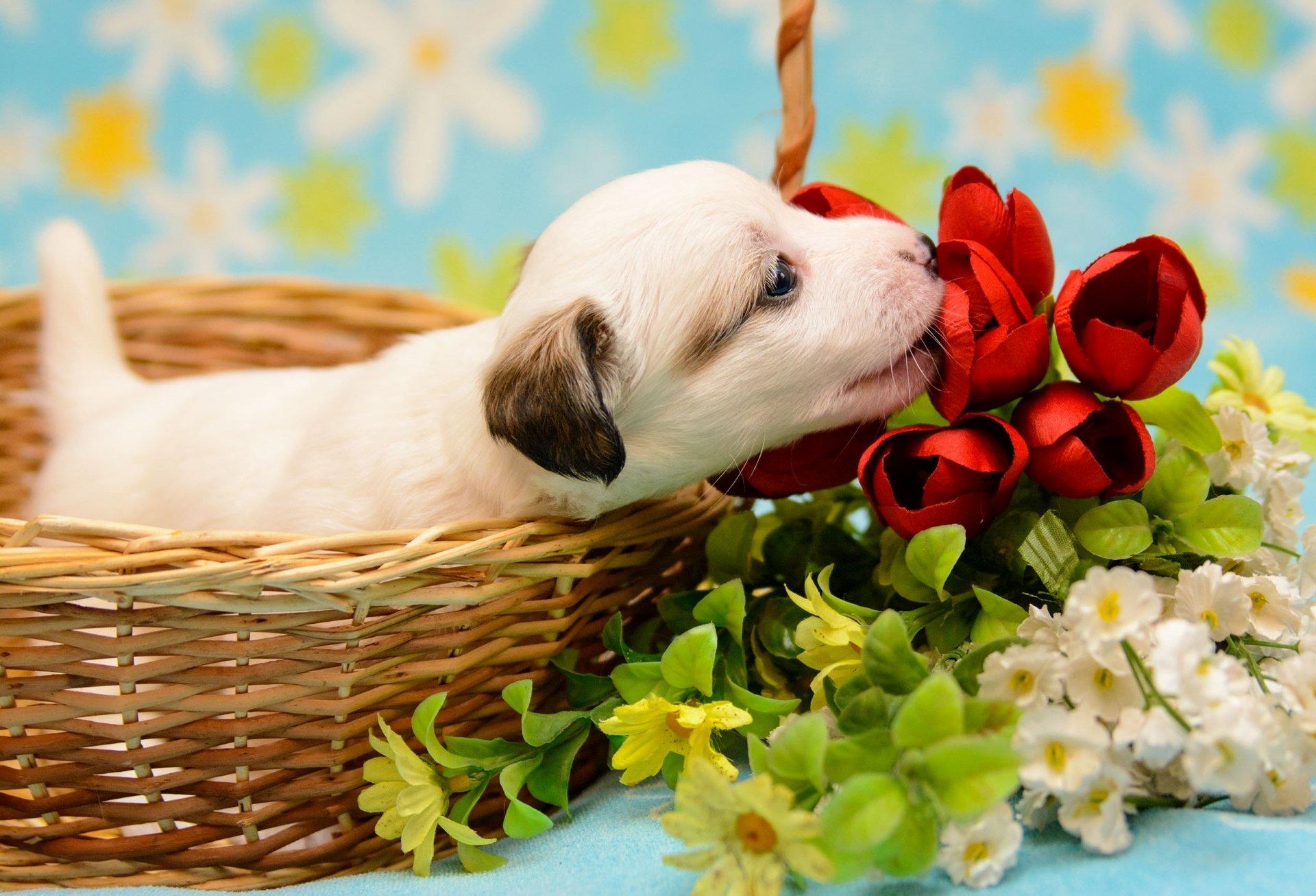 щенок и цветы картинки куплена распродажах загородных