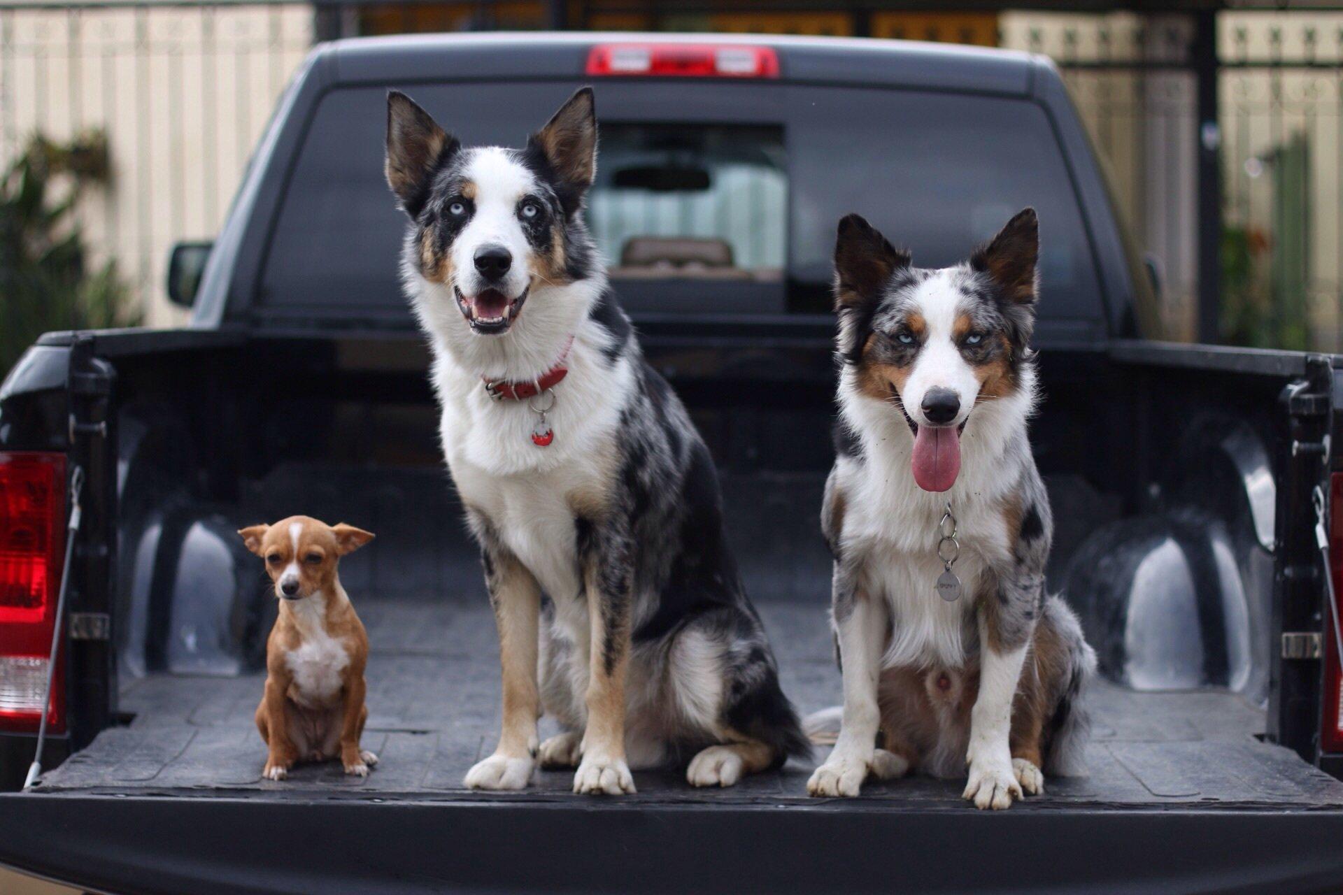 три собаки фото какими осложнениями