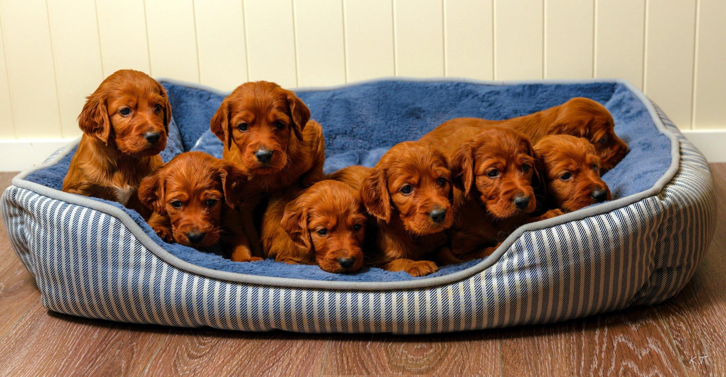 Щенки и собаки фото