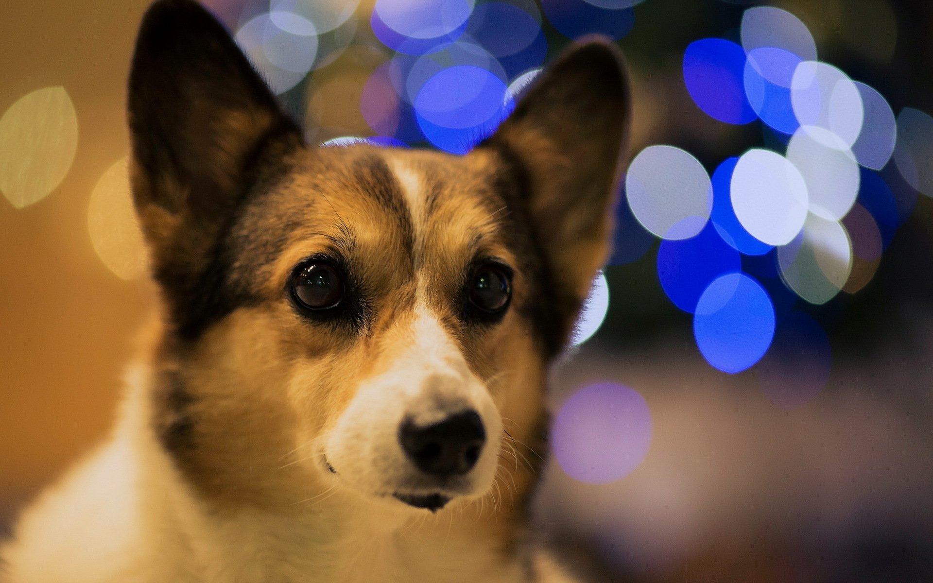 очень картинки для телефона с собаками необходимо