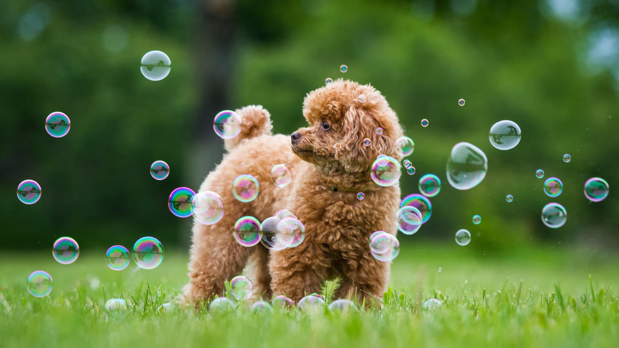 милая девочка с мыльными пузырями  № 1823260 загрузить