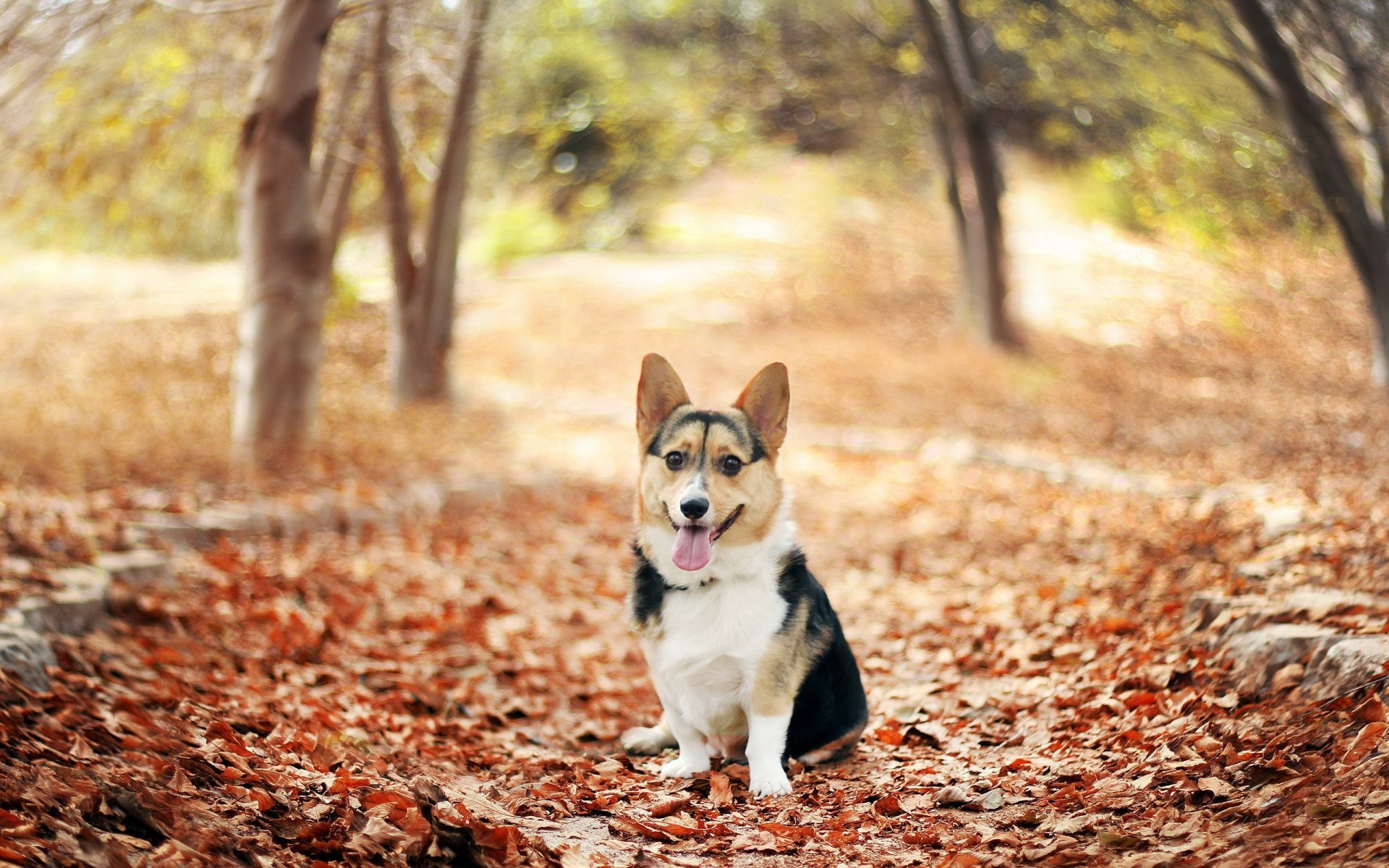 Dog Wallpapers  Full HD wallpaper search