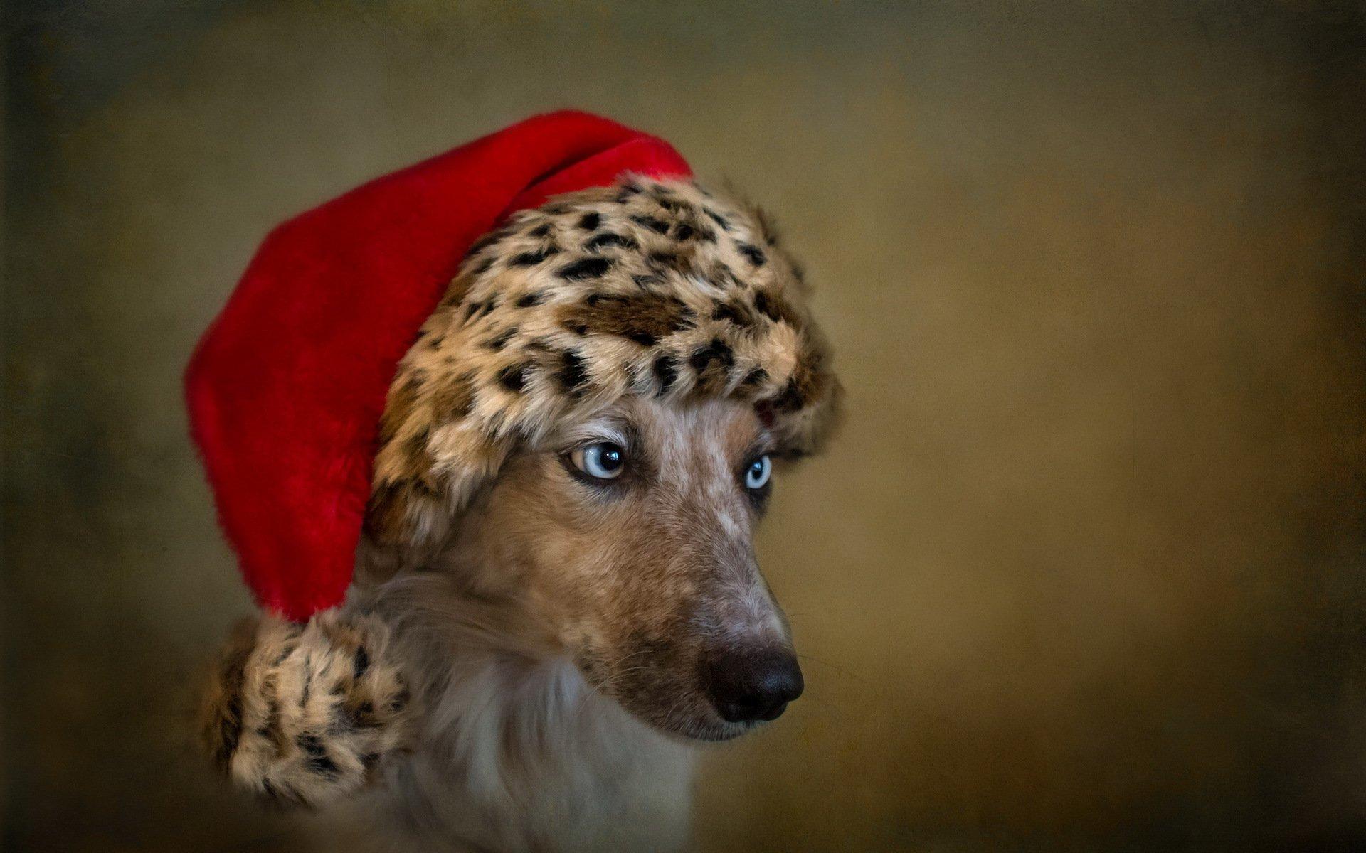 картинки шапок животных драйвера предельно
