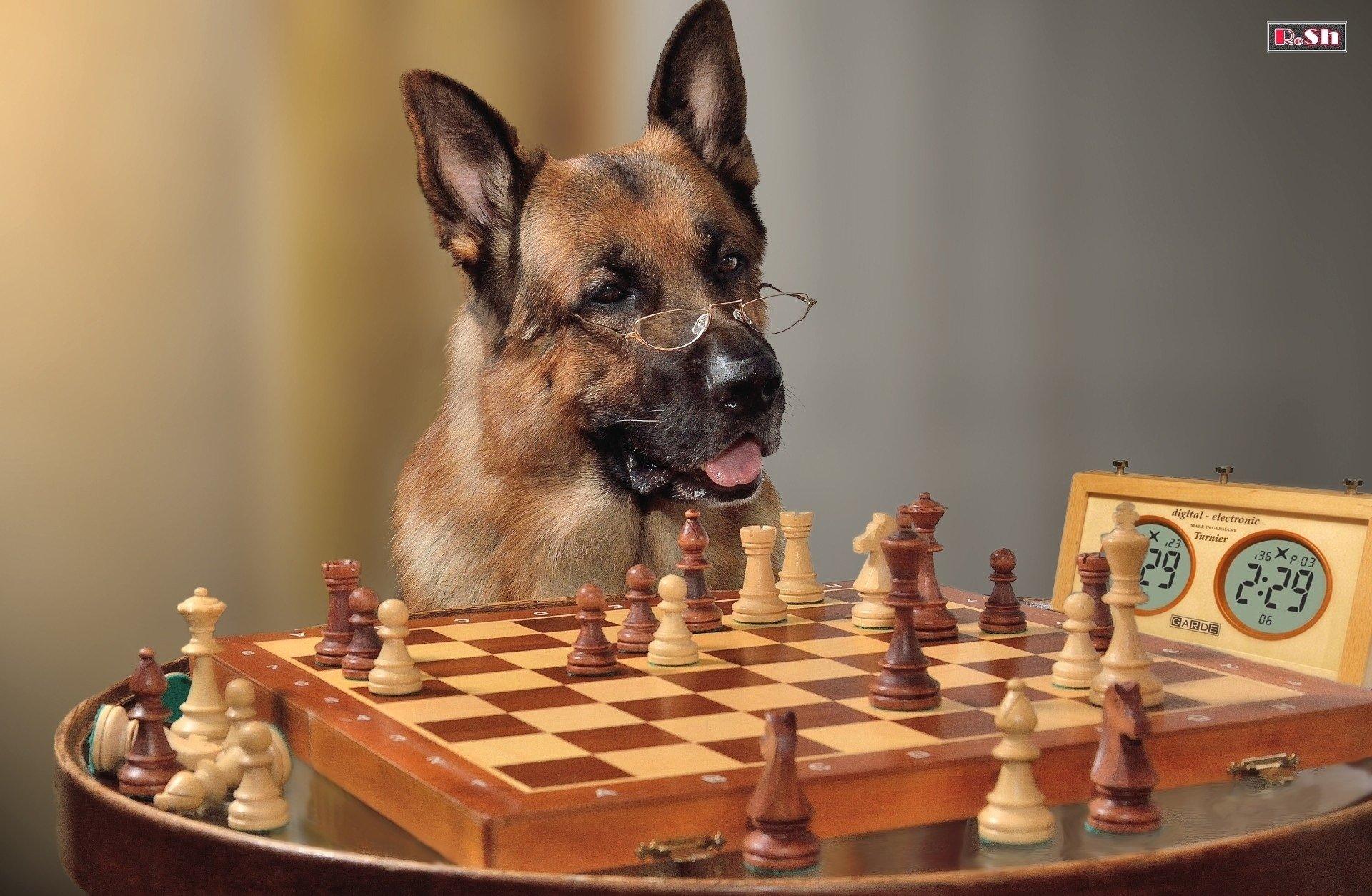 них юморные фото про шахматы мир африки поражает