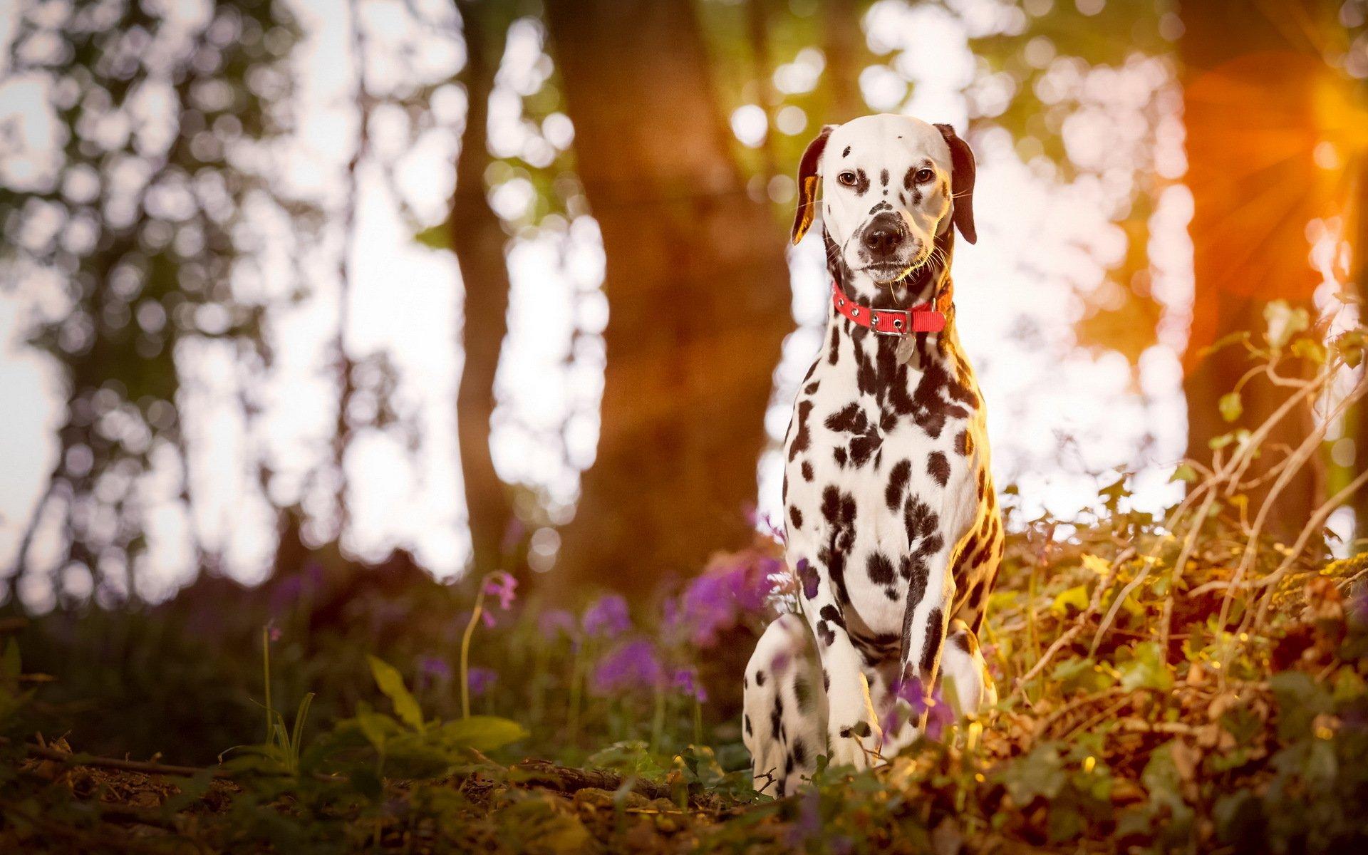 собака дерево лес  № 1114346 бесплатно