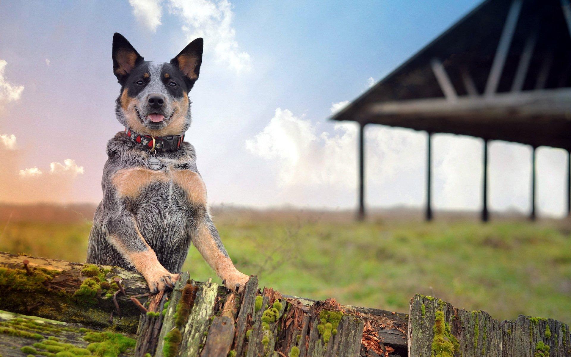 топовые картинки с собаками платья