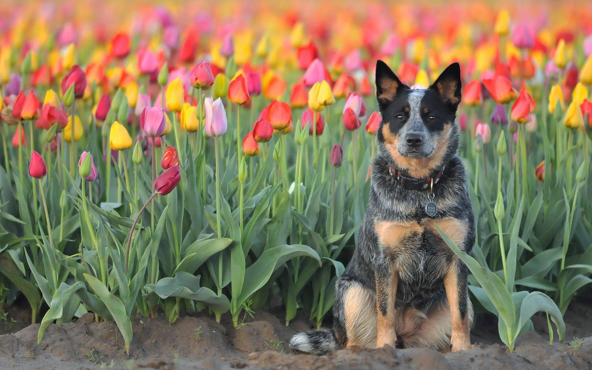 собака поле цветы без смс