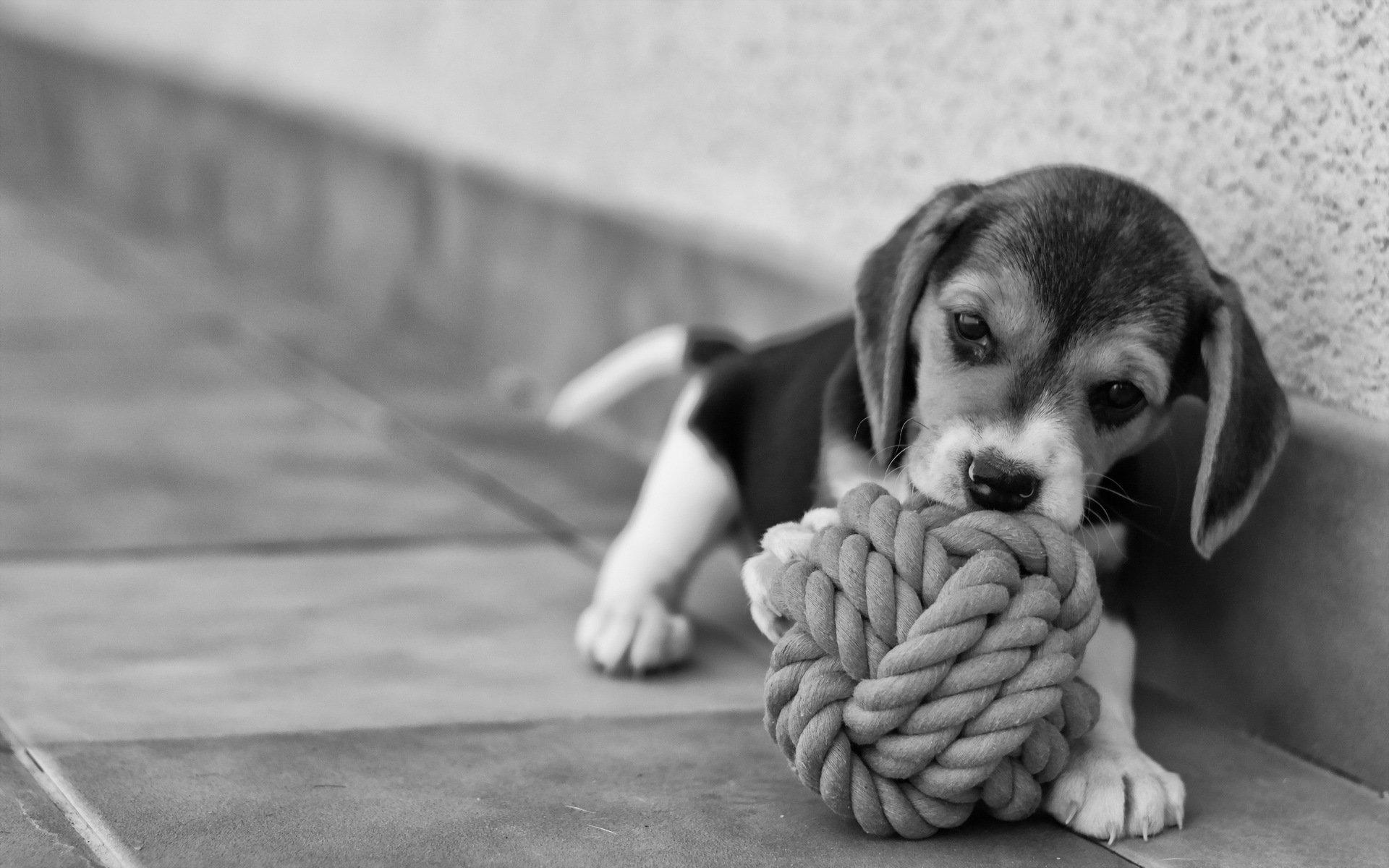 Черно-белый пес на полу  № 1157346 без смс