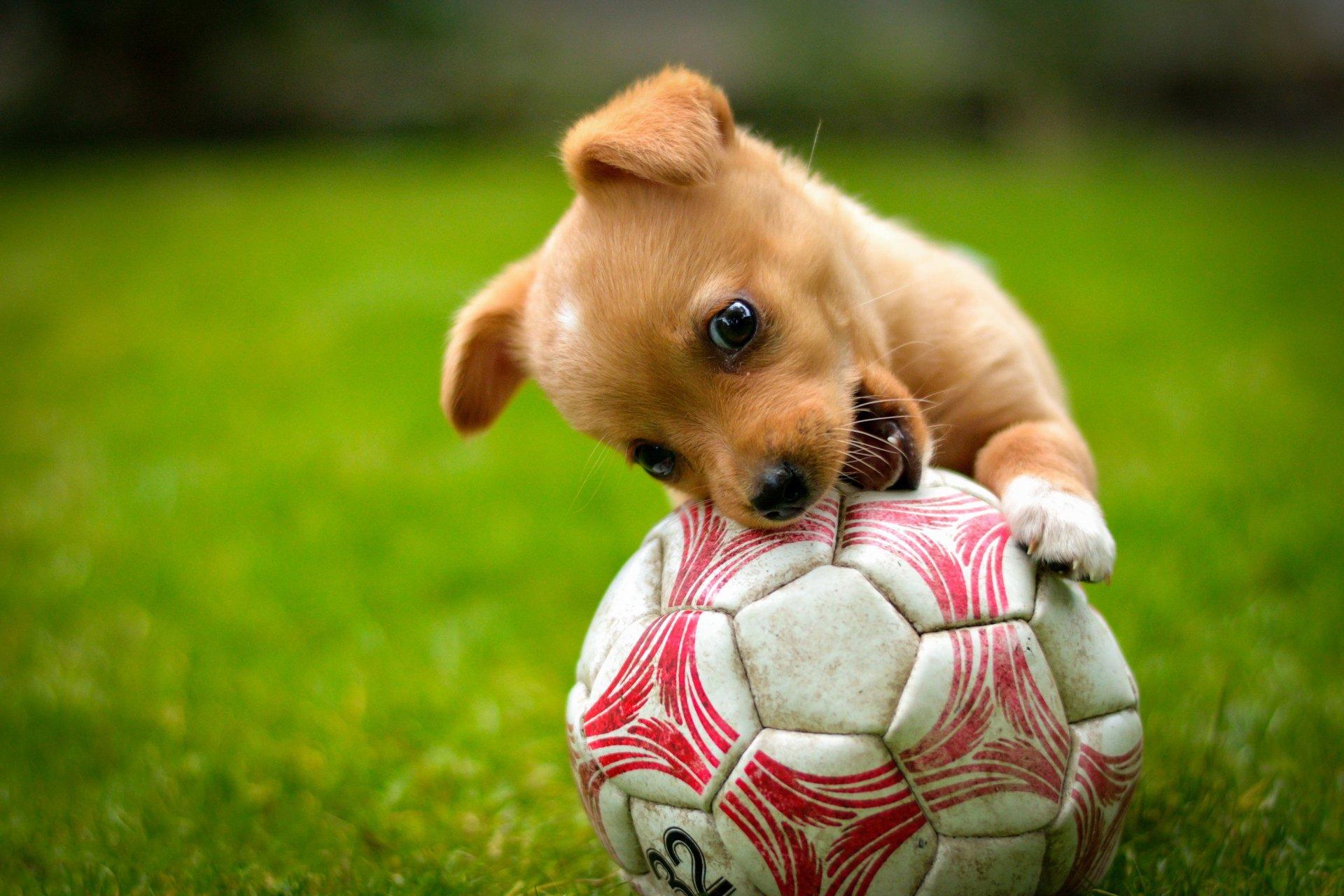 Обои Собака, мяч, друг. Собаки foto 19