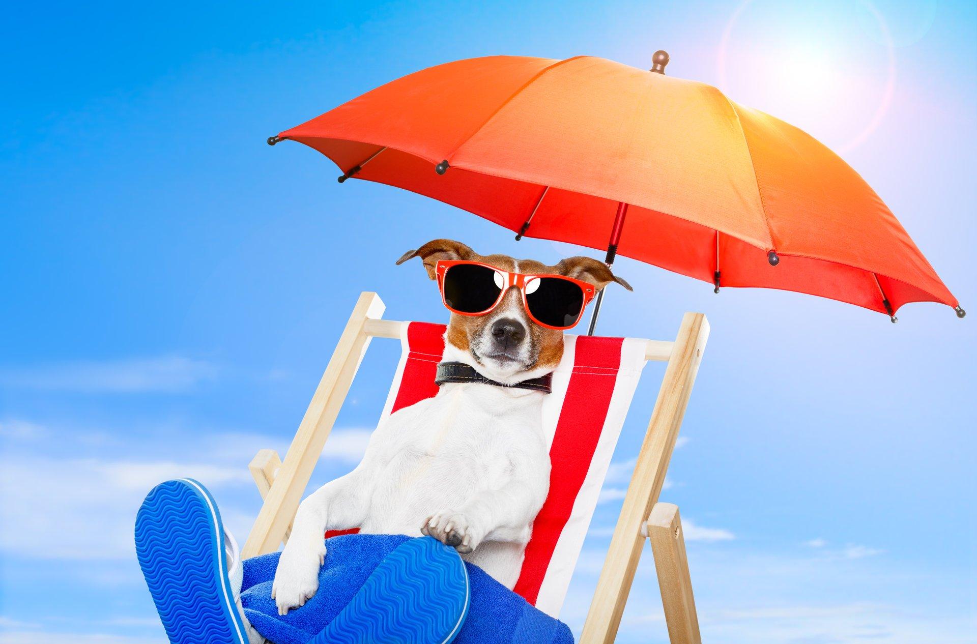 Певец собака юмор очки скачать