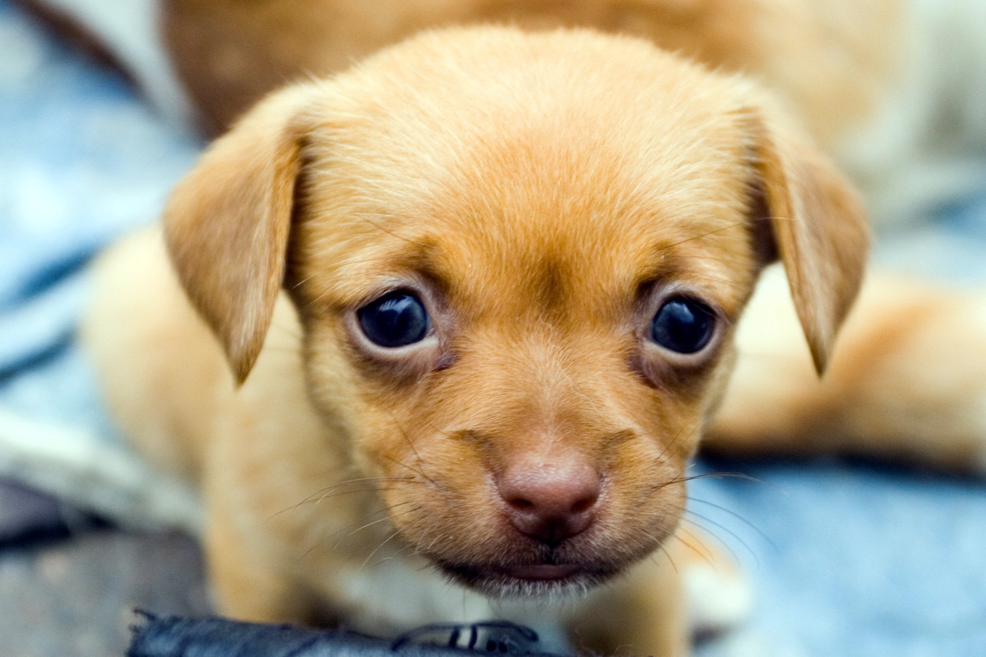 Cute puppies make everything better! So if youre having a bad day this list is your cure These are the 25 cutest puppies ever!