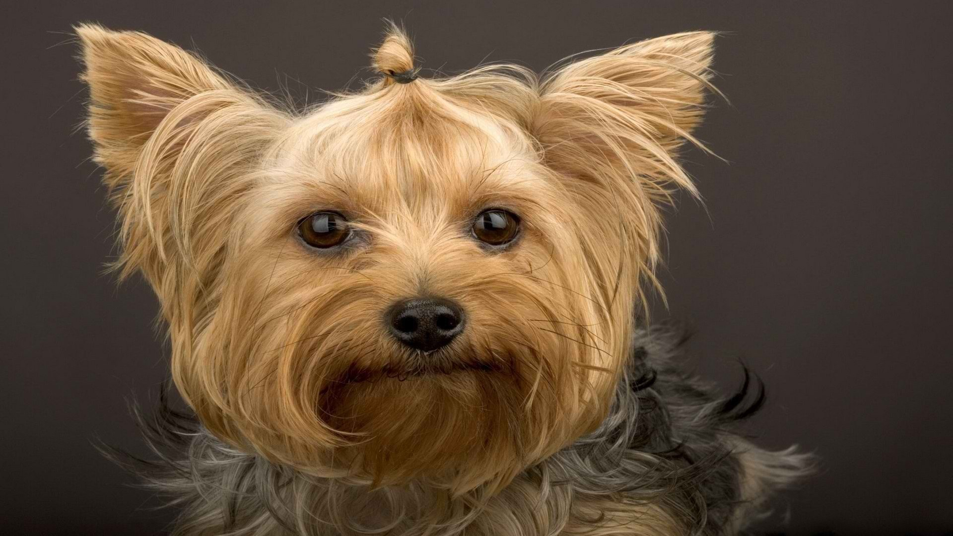 Used Corvettes near Greenville SC - R3 Motorcars Pictures of yorkie terrier mix