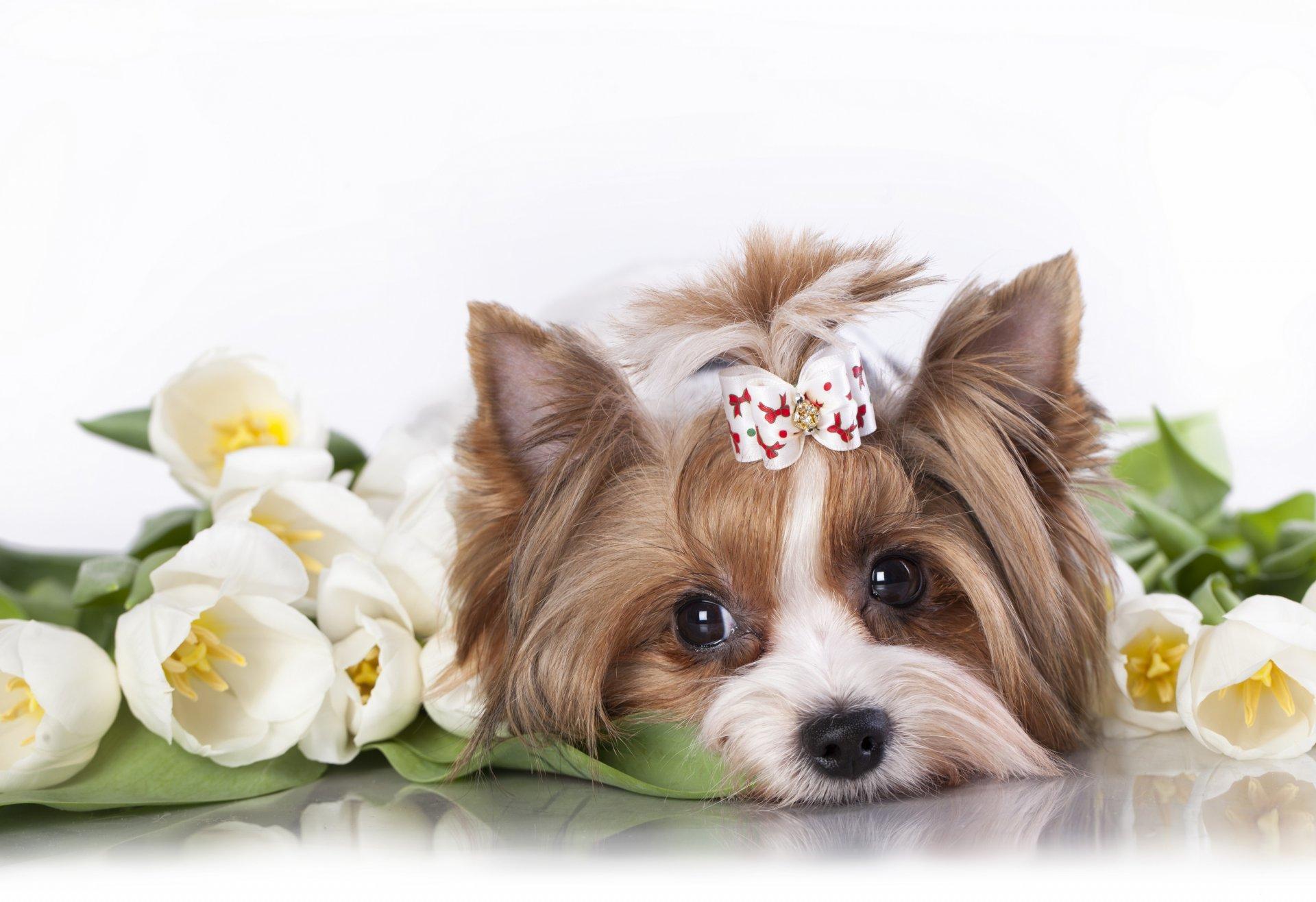 Открытки с щеночками