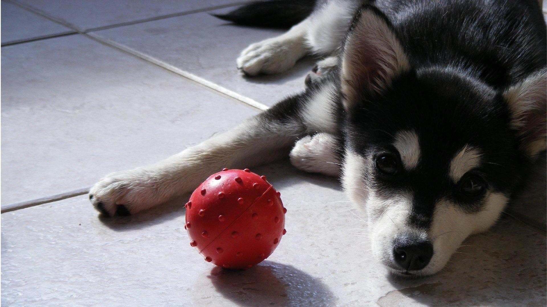 щенок взгляд puppy view анонимно