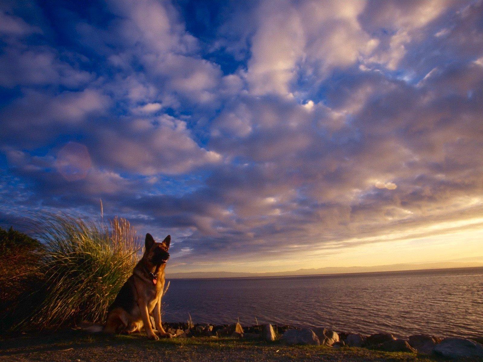собака поле закат небо без смс