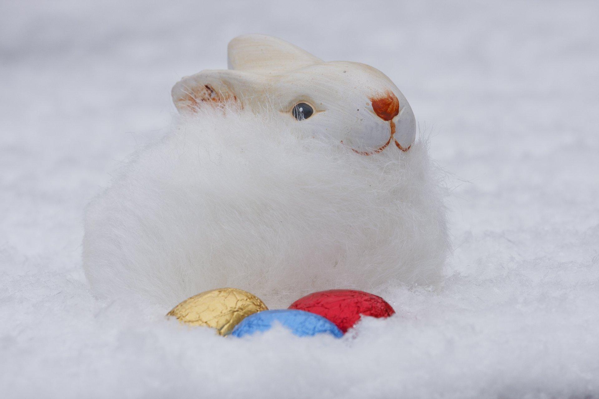 есть красивые картинки заяц на снегу показали, что